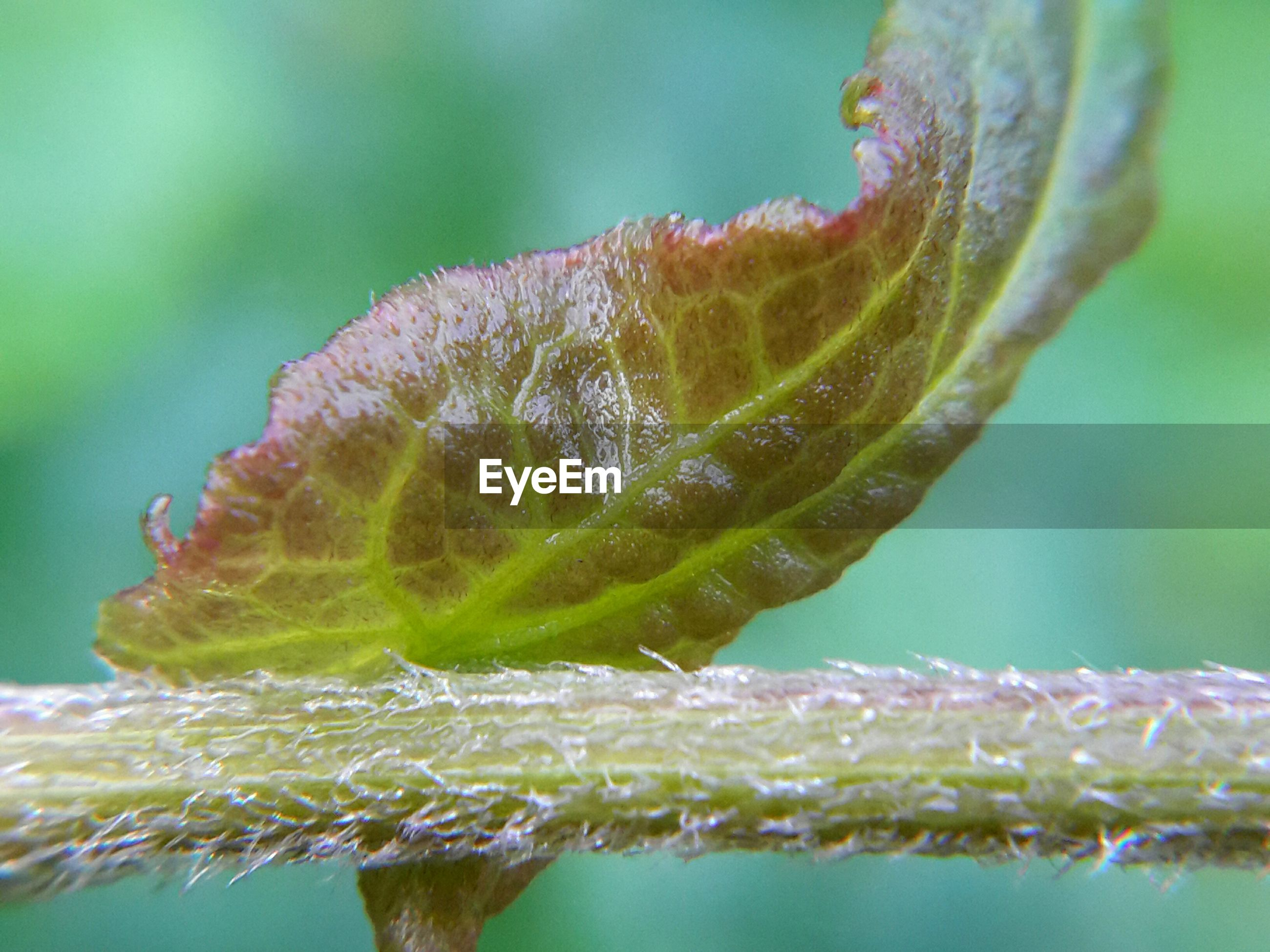 CLOSE-UP OF GREEN LEAF ON WATER