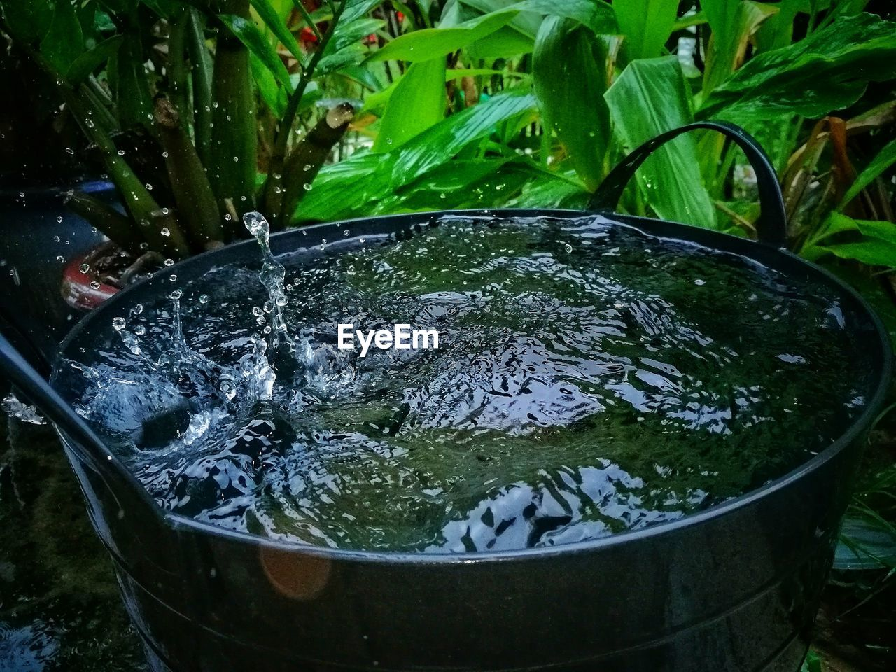 water, no people, high angle view, outdoors, day, nature, close-up, freshness