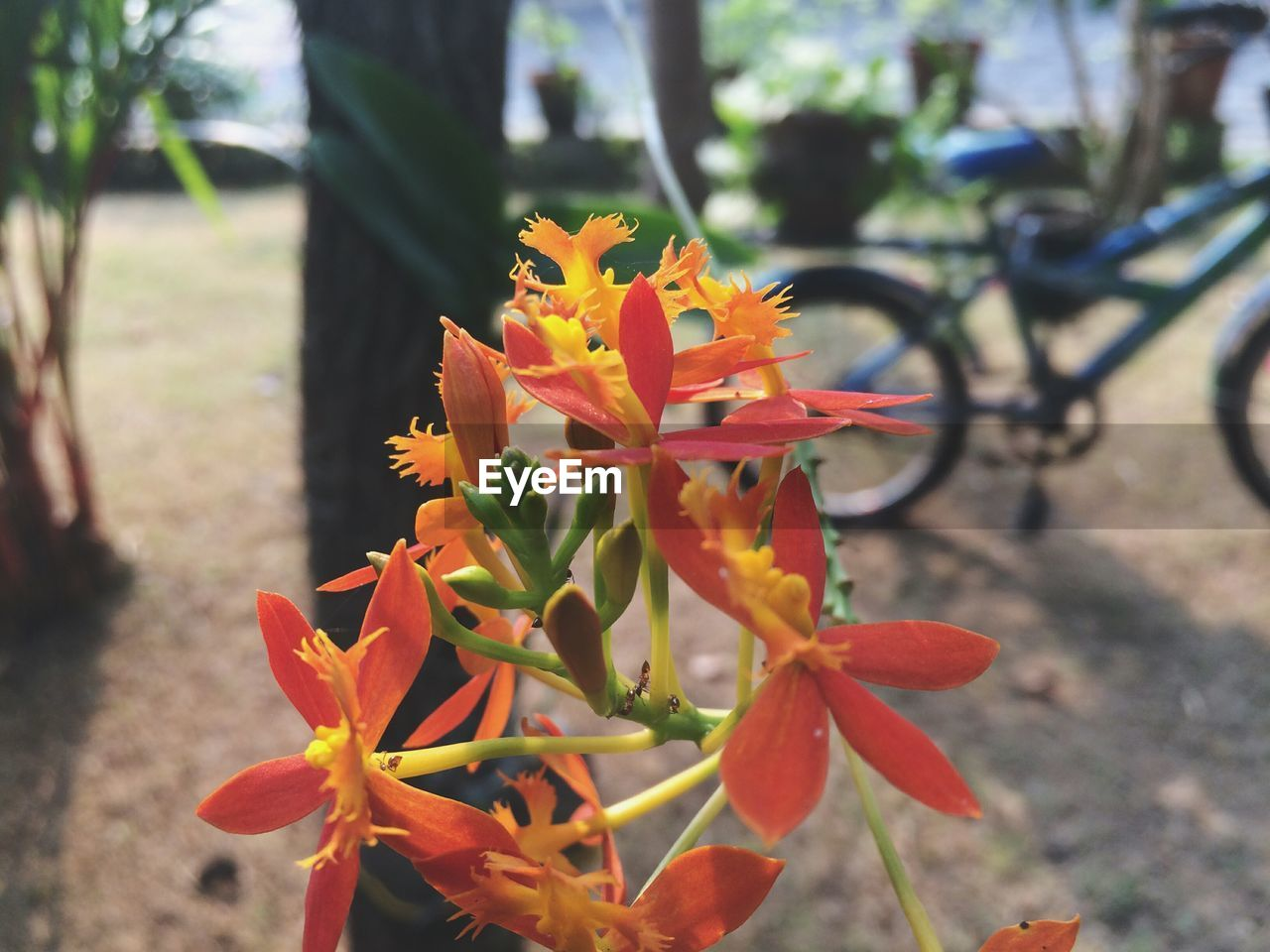 leaf, fragility, growth, nature, flower, day, outdoors, focus on foreground, beauty in nature, petal, close-up, flower head, autumn, plant, freshness, bicycle, no people, maple leaf