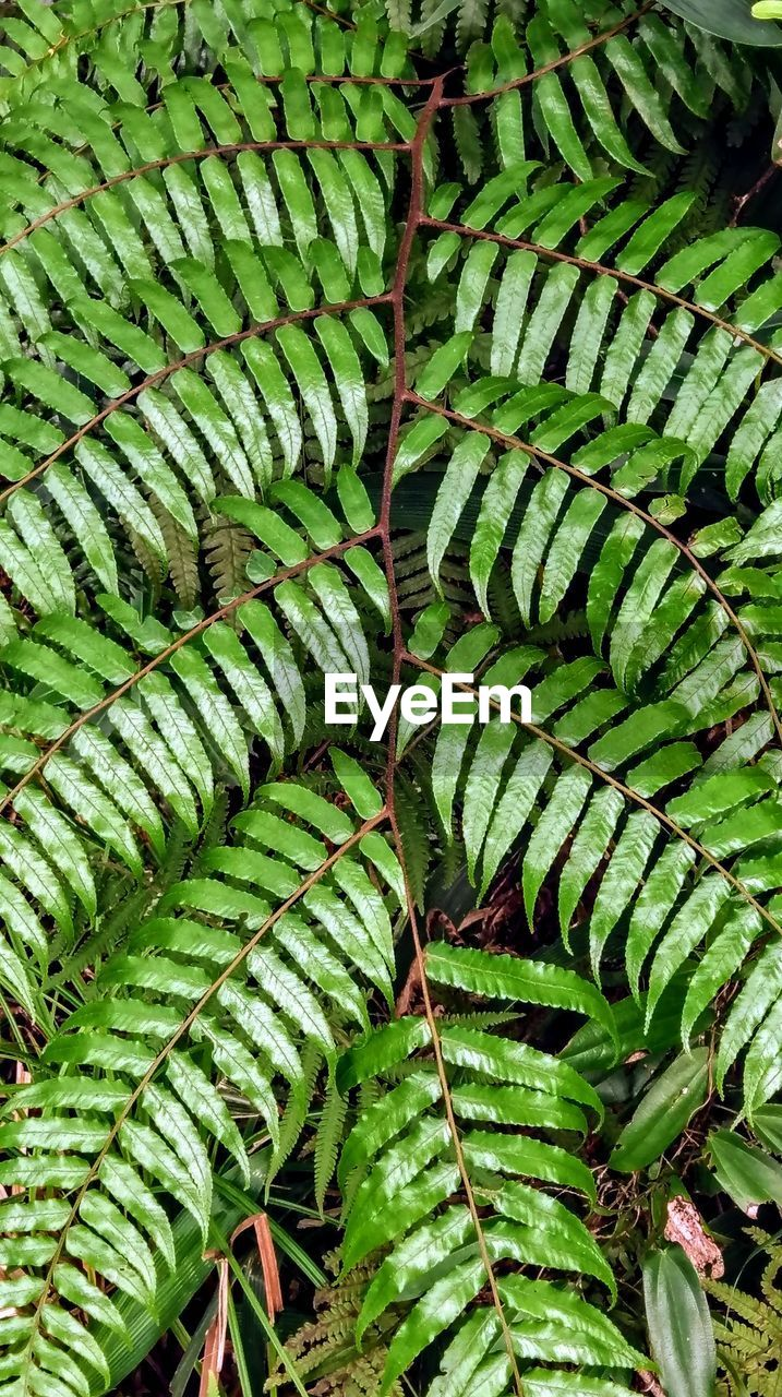 green color, growth, plant, leaf, plant part, no people, full frame, day, backgrounds, nature, close-up, beauty in nature, fern, outdoors, tree, natural pattern, tranquility, pattern, high angle view, focus on foreground, leaves