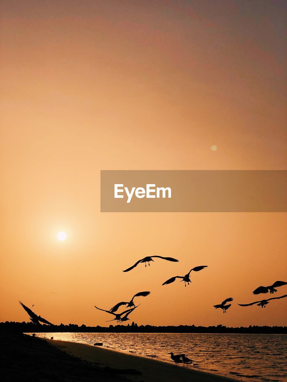sunset, sky, water, bird, beauty in nature, sea, animals in the wild, vertebrate, orange color, animal wildlife, animal themes, flying, animal, group of animals, scenics - nature, silhouette, sun, large group of animals, nature, horizon over water, no people, flock of birds, outdoors