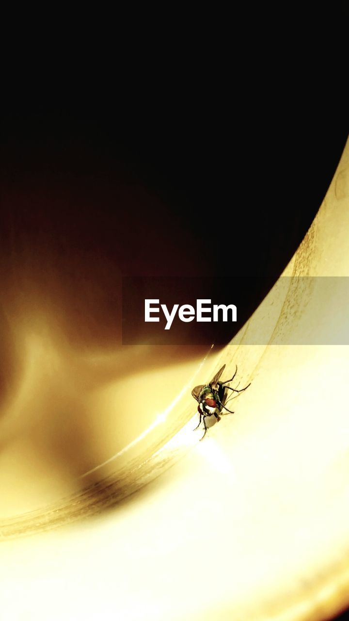 insect, animal themes, animals in the wild, one animal, no people, housefly, outdoors, day, close-up, nature
