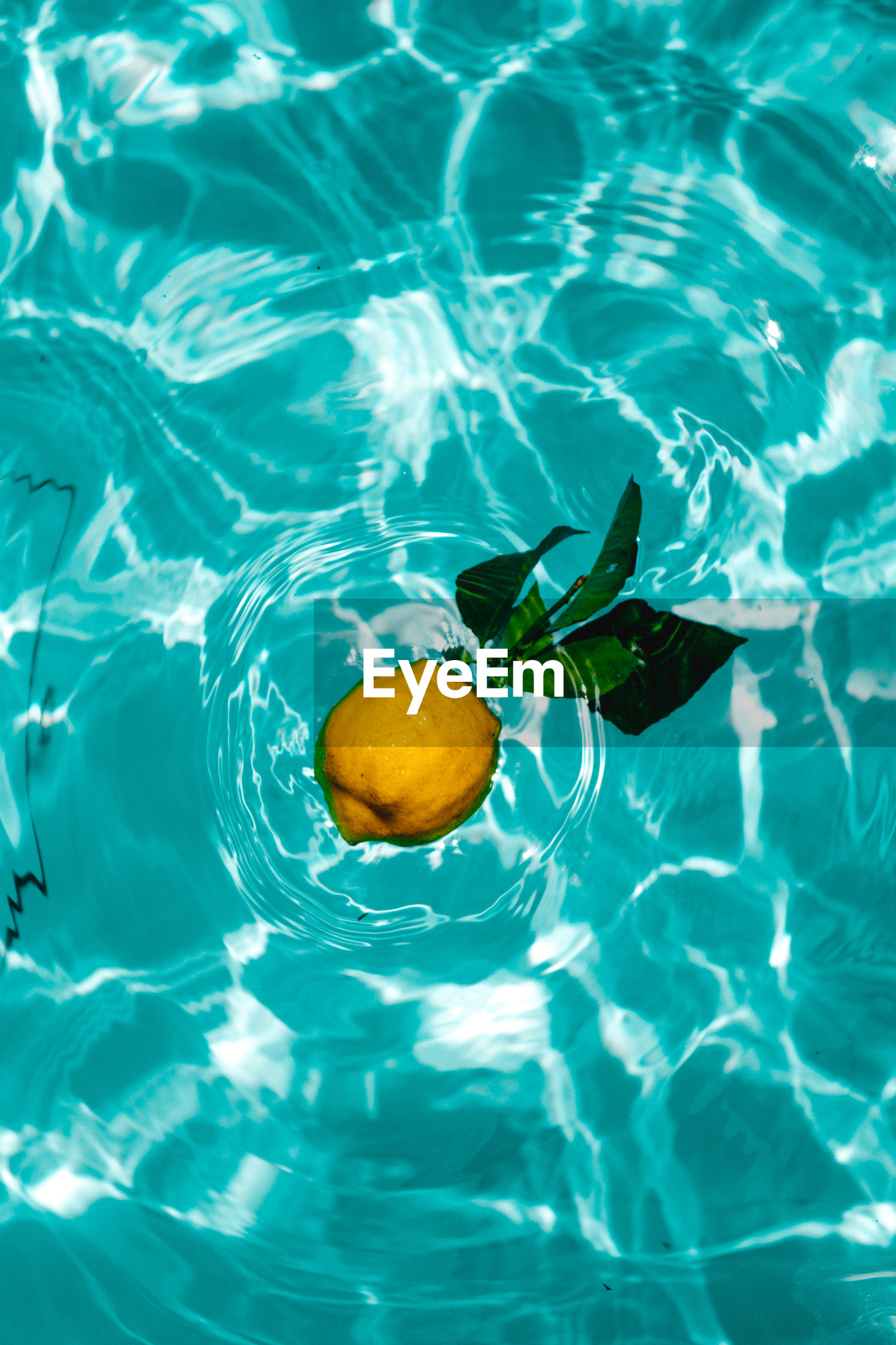 Directly above shot of citrus fruit in swimming pool