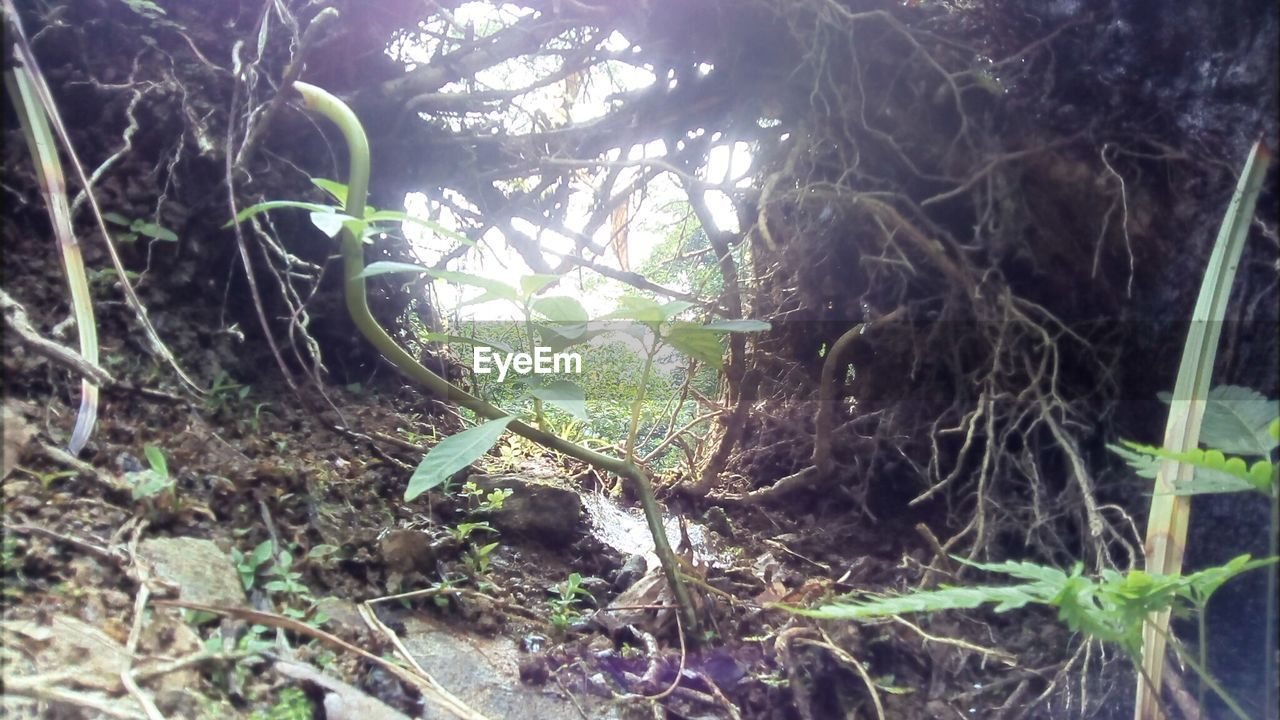 growth, nature, no people, day, tree trunk, forest, plant, tree, outdoors, leaf, beauty in nature, branch, close-up