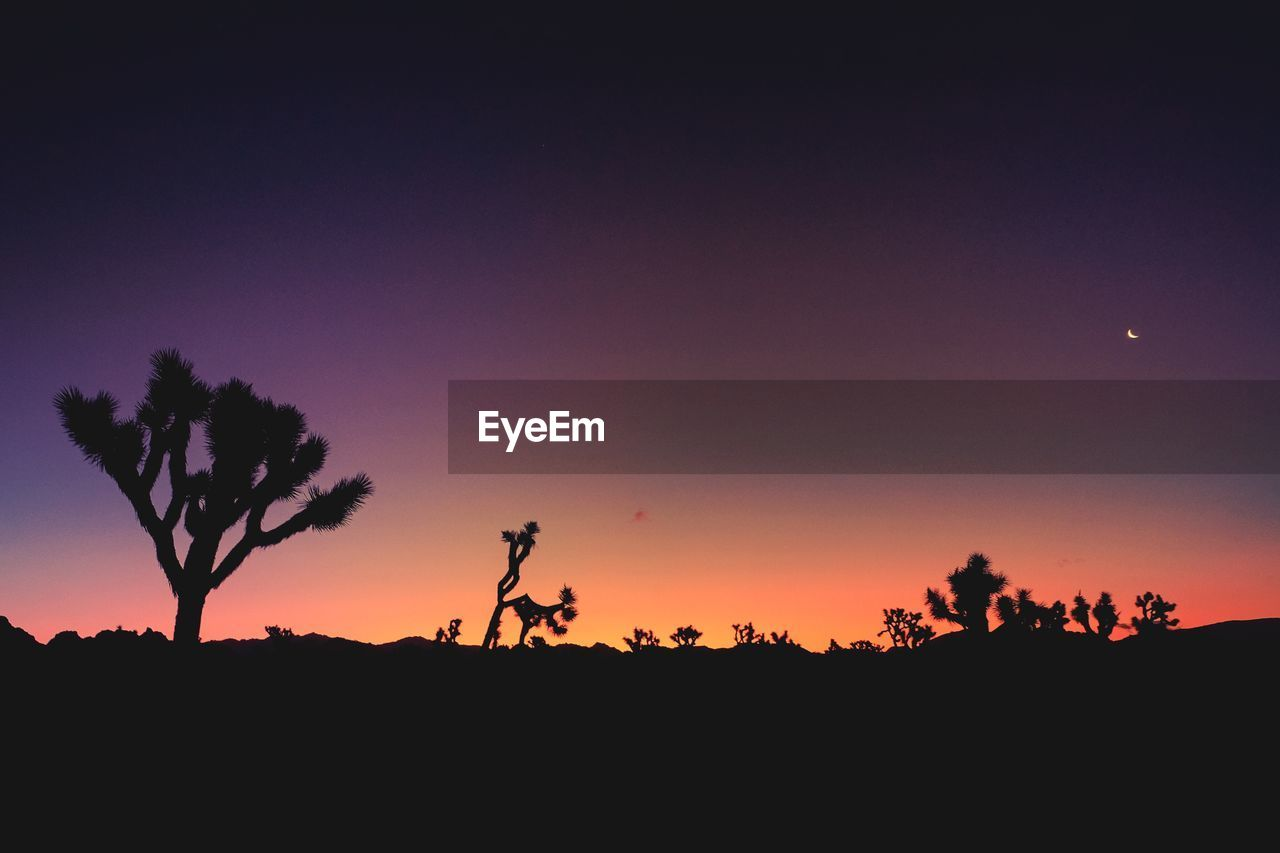 silhouette, sunset, nature, tree, scenics, orange color, tranquil scene, beauty in nature, sky, tranquility, landscape, outdoors, moon, growth, clear sky, no people, night