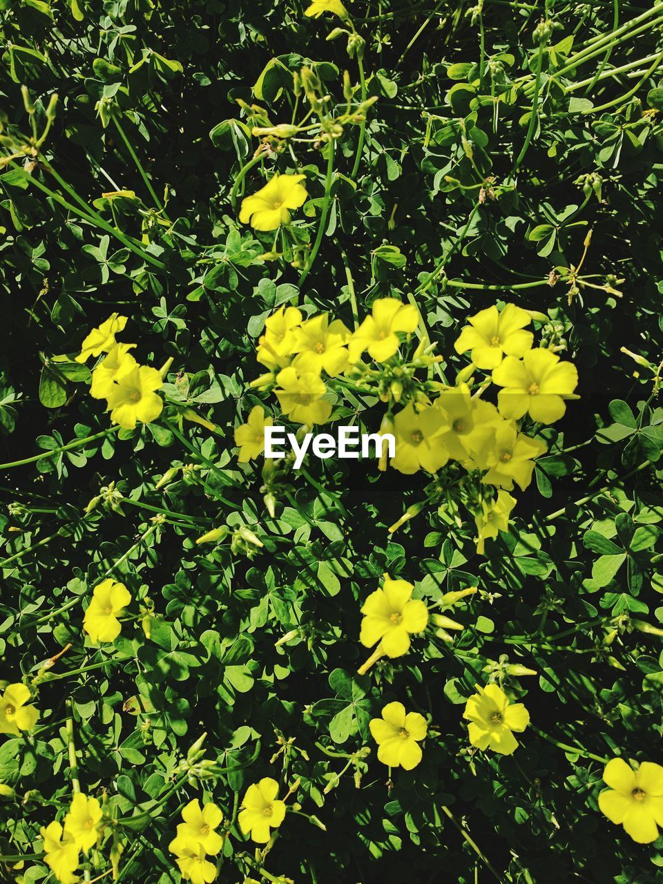 yellow, flower, growth, nature, beauty in nature, plant, freshness, fragility, blossom, petal, outdoors, no people, blooming, day, flower head, close-up
