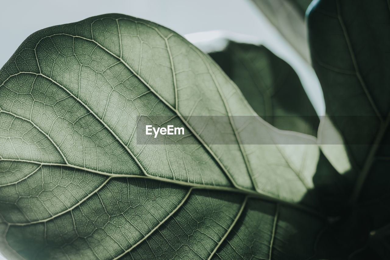 leaf, plant part, leaf vein, close-up, plant, nature, no people, green color, day, beauty in nature, growth, natural pattern, outdoors, fragility, vulnerability, focus on foreground, autumn, pattern, leaves, selective focus, natural condition