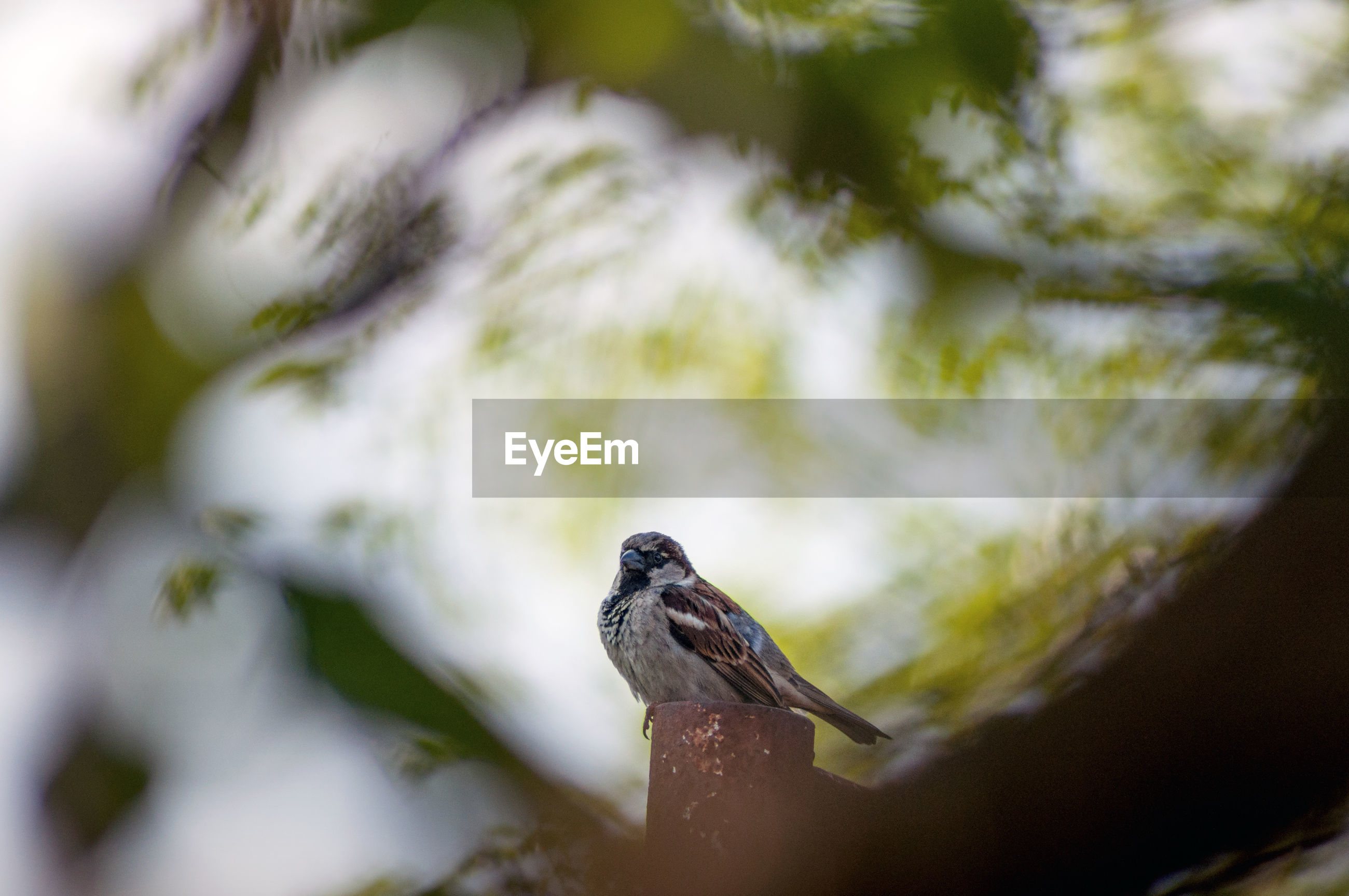 CLOSE-UP OF A BIRD PERCHING ON A BRANCH
