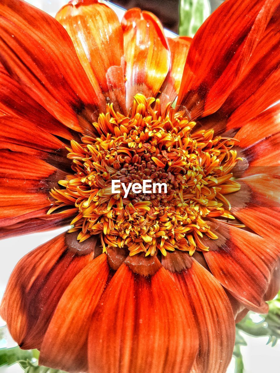 flower, petal, flower head, fragility, beauty in nature, freshness, nature, orange color, growth, pollen, no people, plant, blooming, day, close-up, outdoors