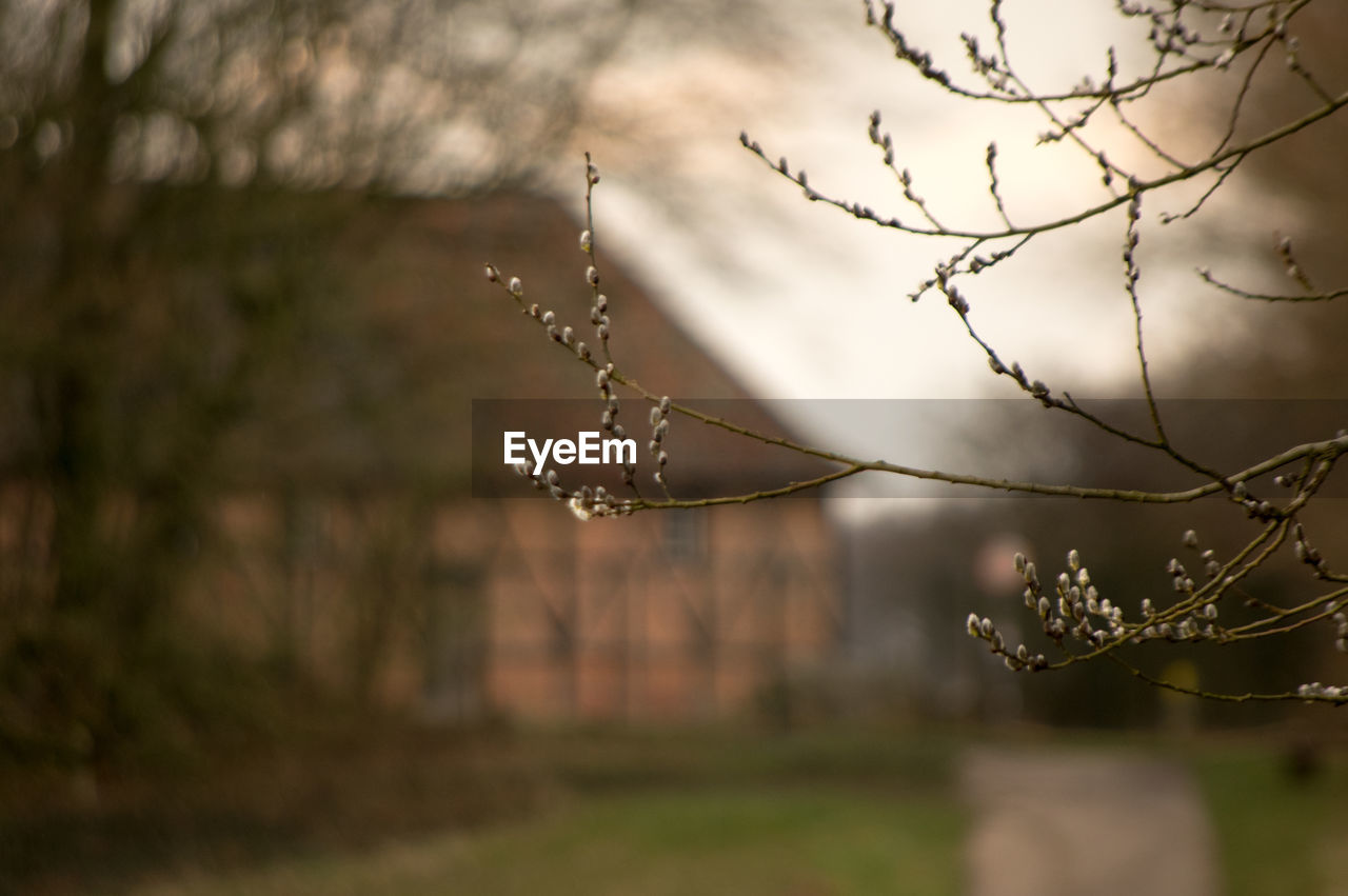 nature, focus on foreground, outdoors, no people, beauty in nature, day, branch, close-up, sky, fragility, tree, freshness