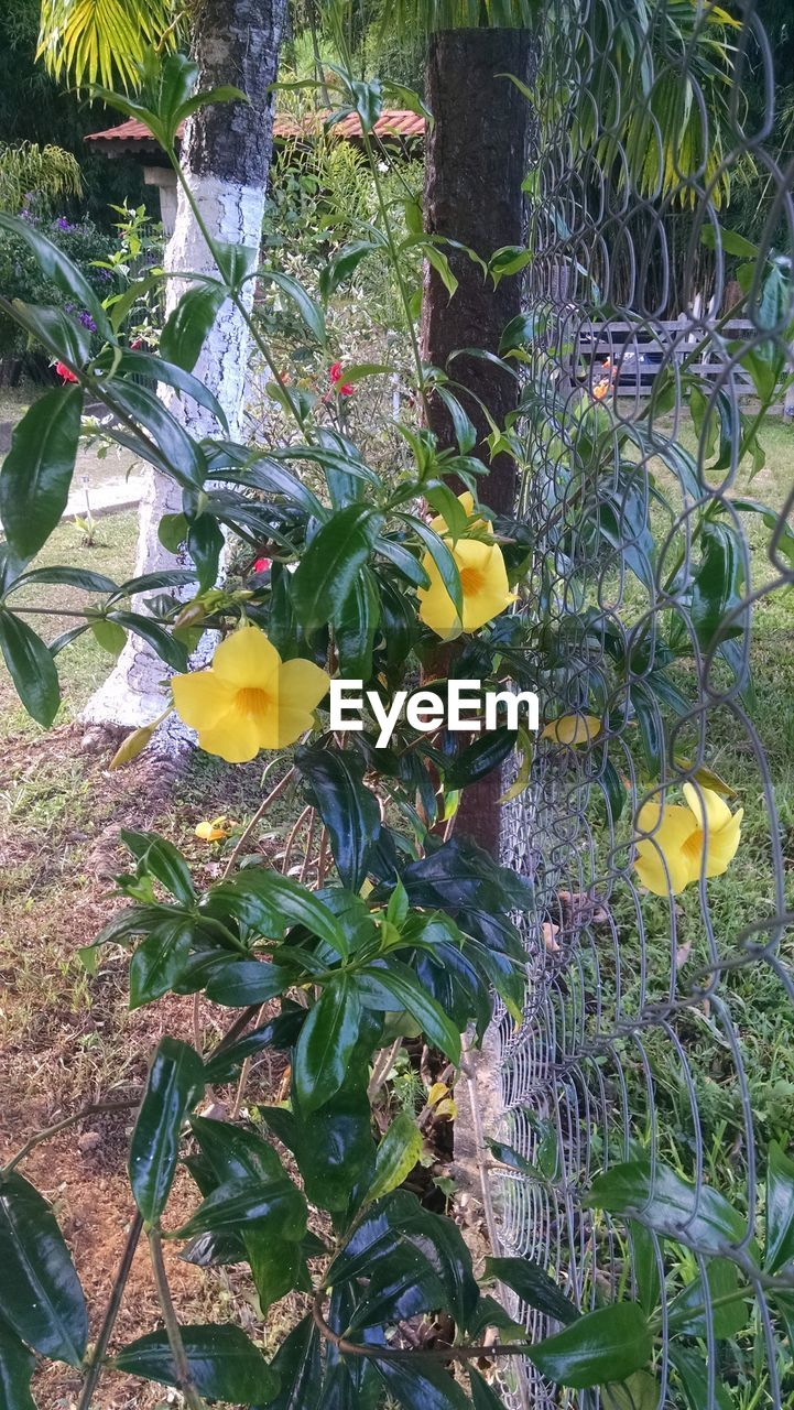 growth, plant, yellow, leaf, no people, green color, nature, outdoors, day, flower, freshness, beauty in nature, fruit, fragility, tree, close-up