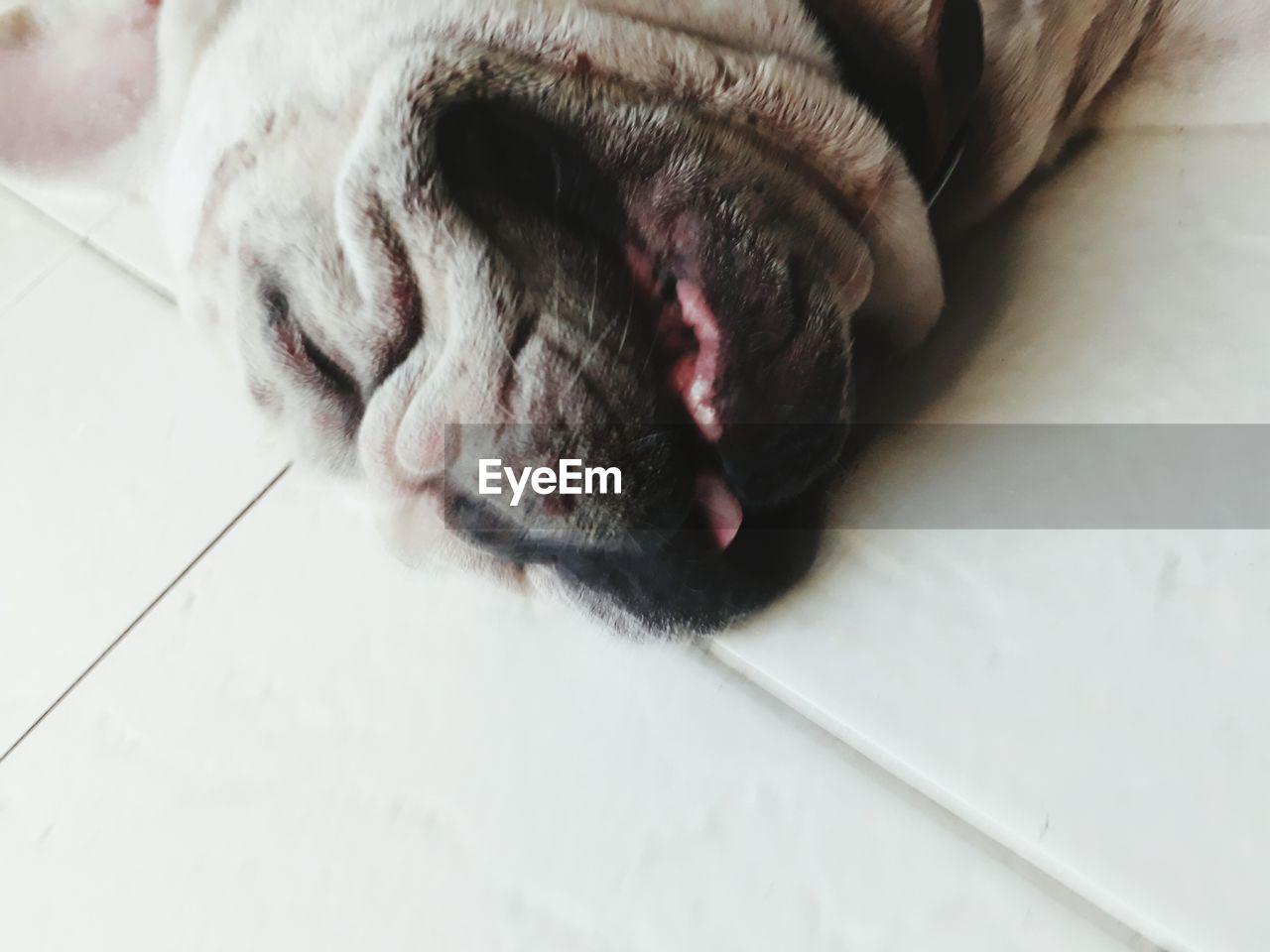 domestic, pets, domestic animals, animal themes, animal, one animal, mammal, dog, canine, vertebrate, indoors, animal body part, relaxation, no people, close-up, home interior, lying down, flooring, resting, sleeping, animal head, tiled floor, animal nose, animal mouth