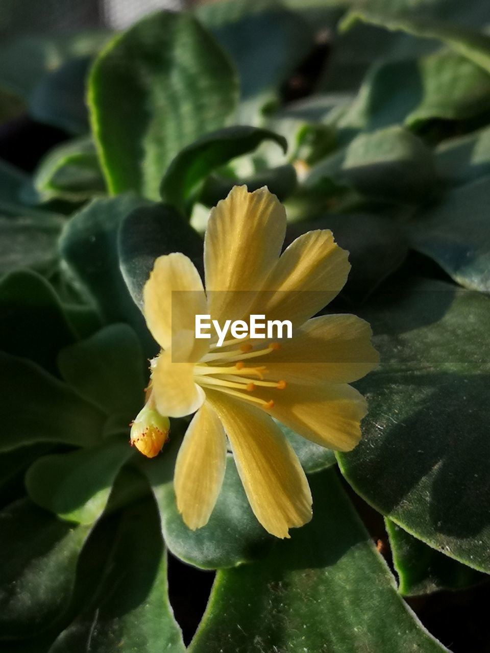 beauty in nature, flowering plant, plant, flower, vulnerability, fragility, petal, inflorescence, freshness, flower head, growth, close-up, yellow, nature, plant part, leaf, no people, outdoors, day, pollen