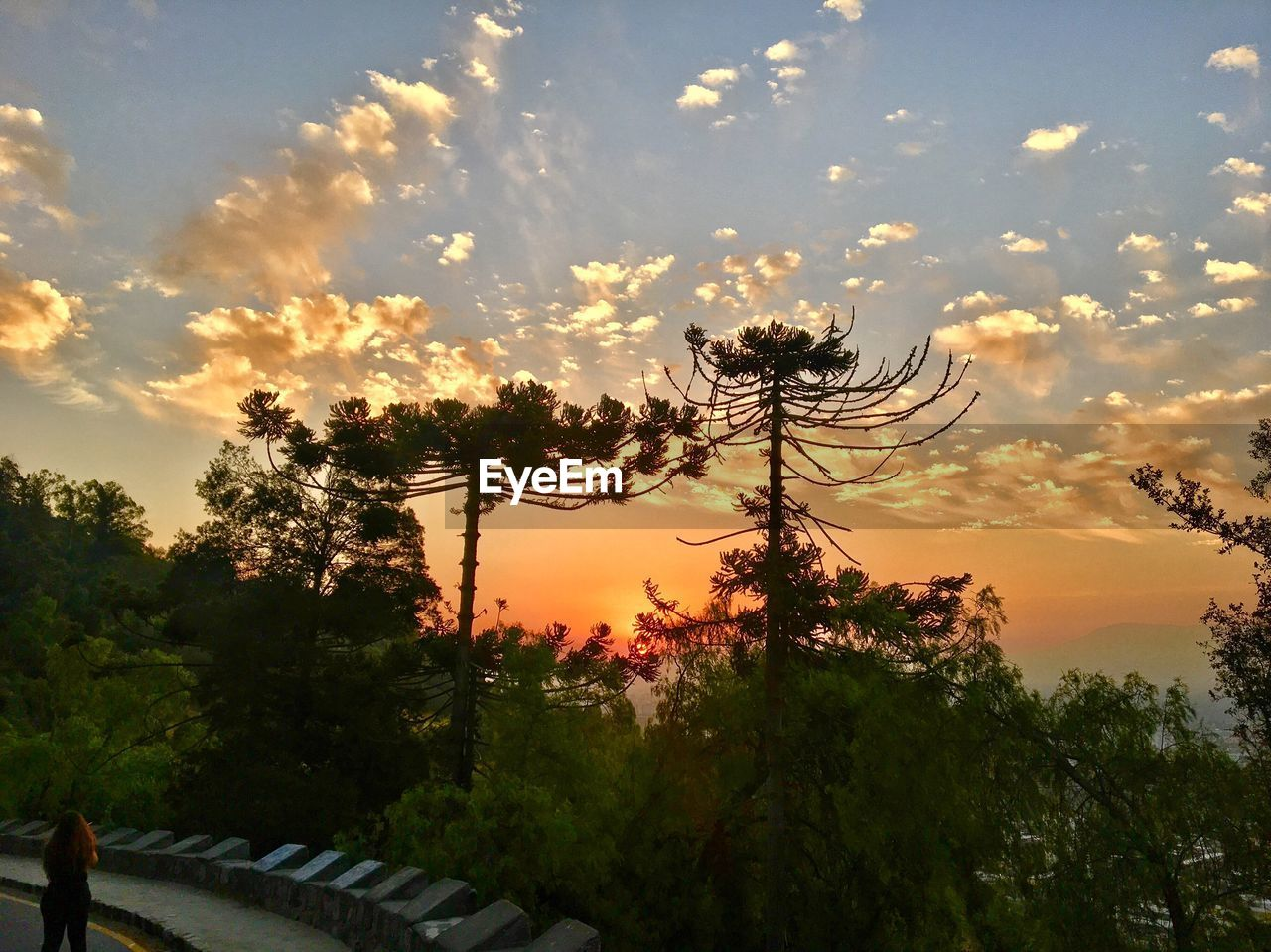 tree, sunset, sky, nature, beauty in nature, outdoors, growth, cloud - sky, scenics, silhouette, no people, day