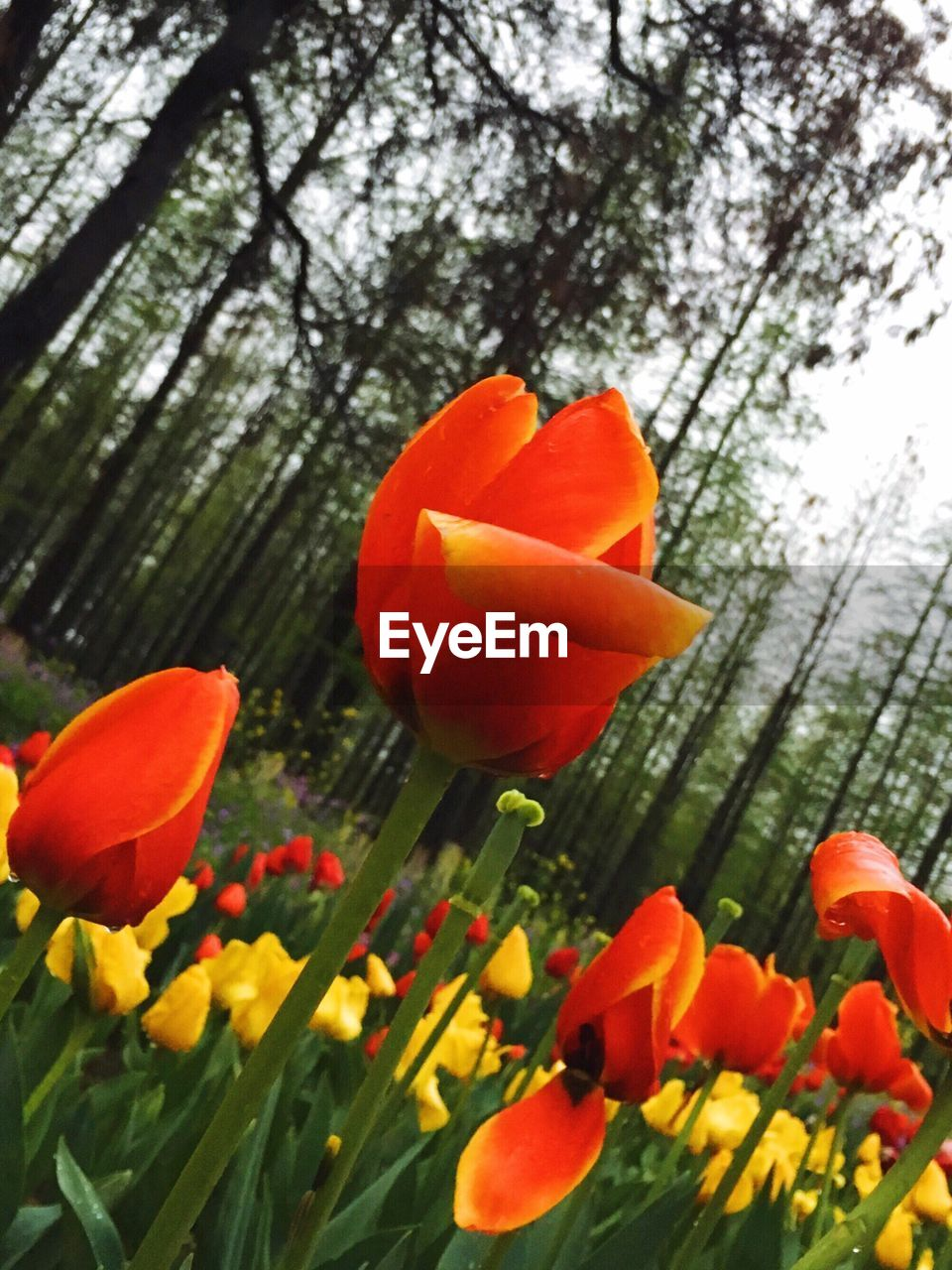 flower, growth, beauty in nature, petal, nature, freshness, orange color, plant, fragility, blooming, flower head, day, no people, outdoors, tree, close-up, sky