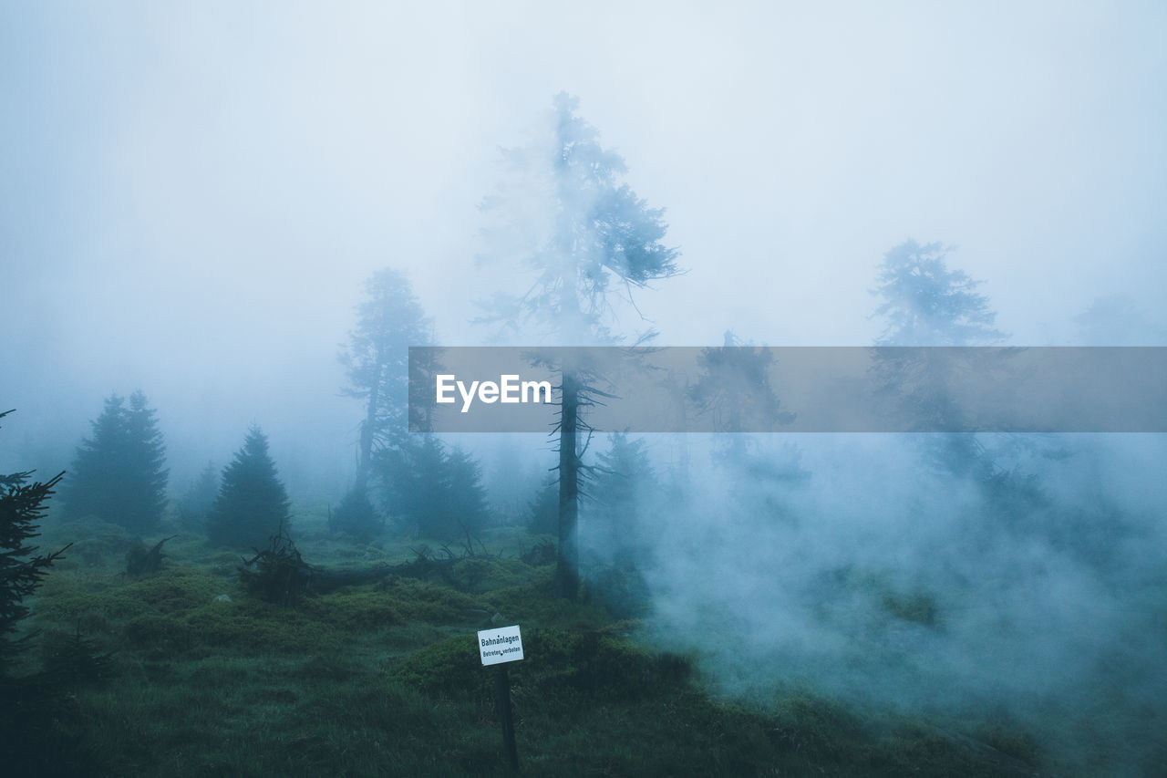 plant, tree, fog, tranquil scene, tranquility, beauty in nature, land, no people, nature, day, sky, growth, scenics - nature, forest, non-urban scene, outdoors, environment, green color, cold temperature, coniferous tree