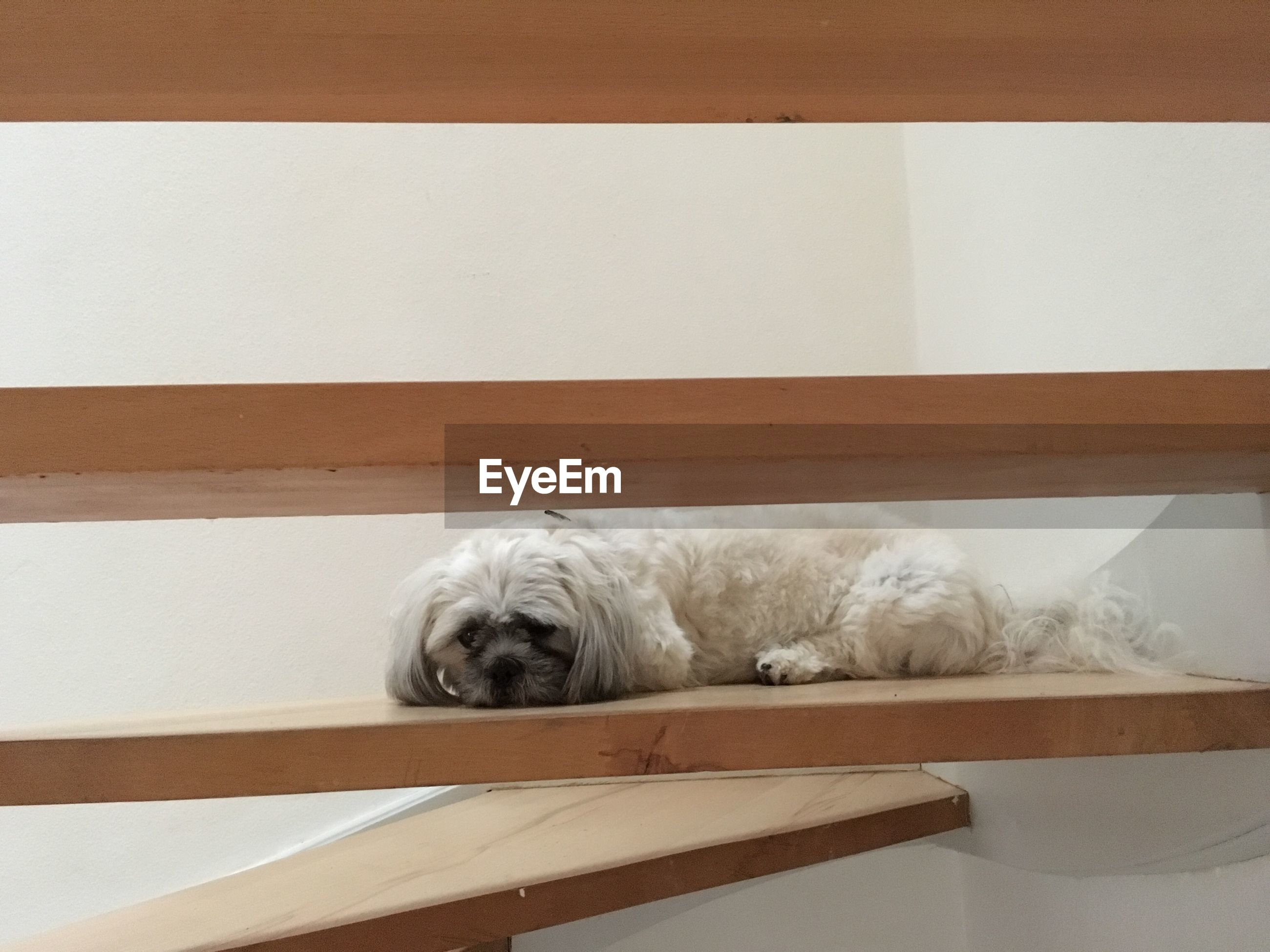 Dog resting on steps