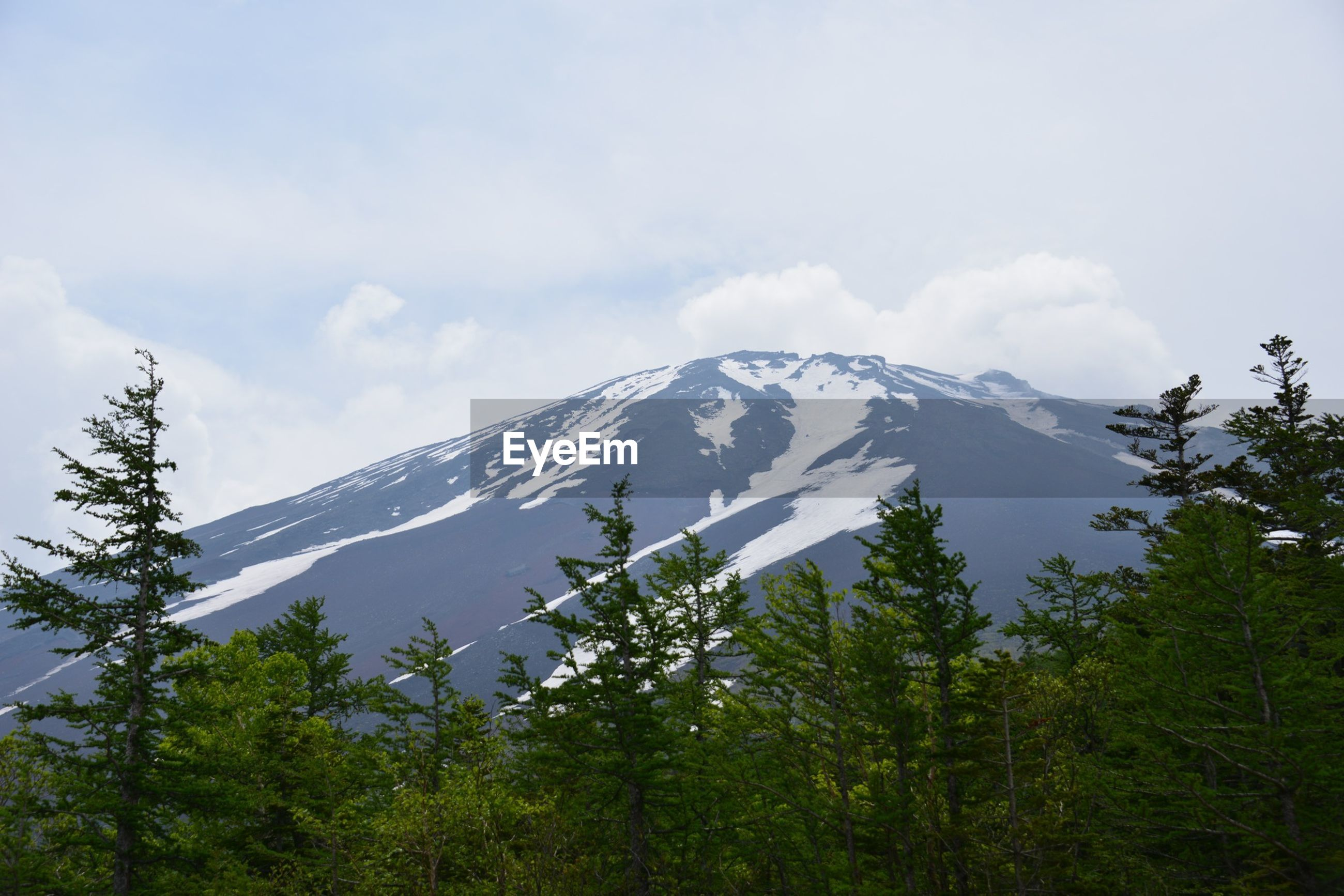 View of trees with snowcapped mountain against sky