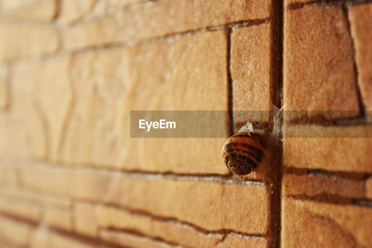 invertebrate, animal themes, close-up, wall - building feature, wall, animal, one animal, animal wildlife, no people, animals in the wild, built structure, brick wall, architecture, brick, day, insect, outdoors, brown, mollusk, snail