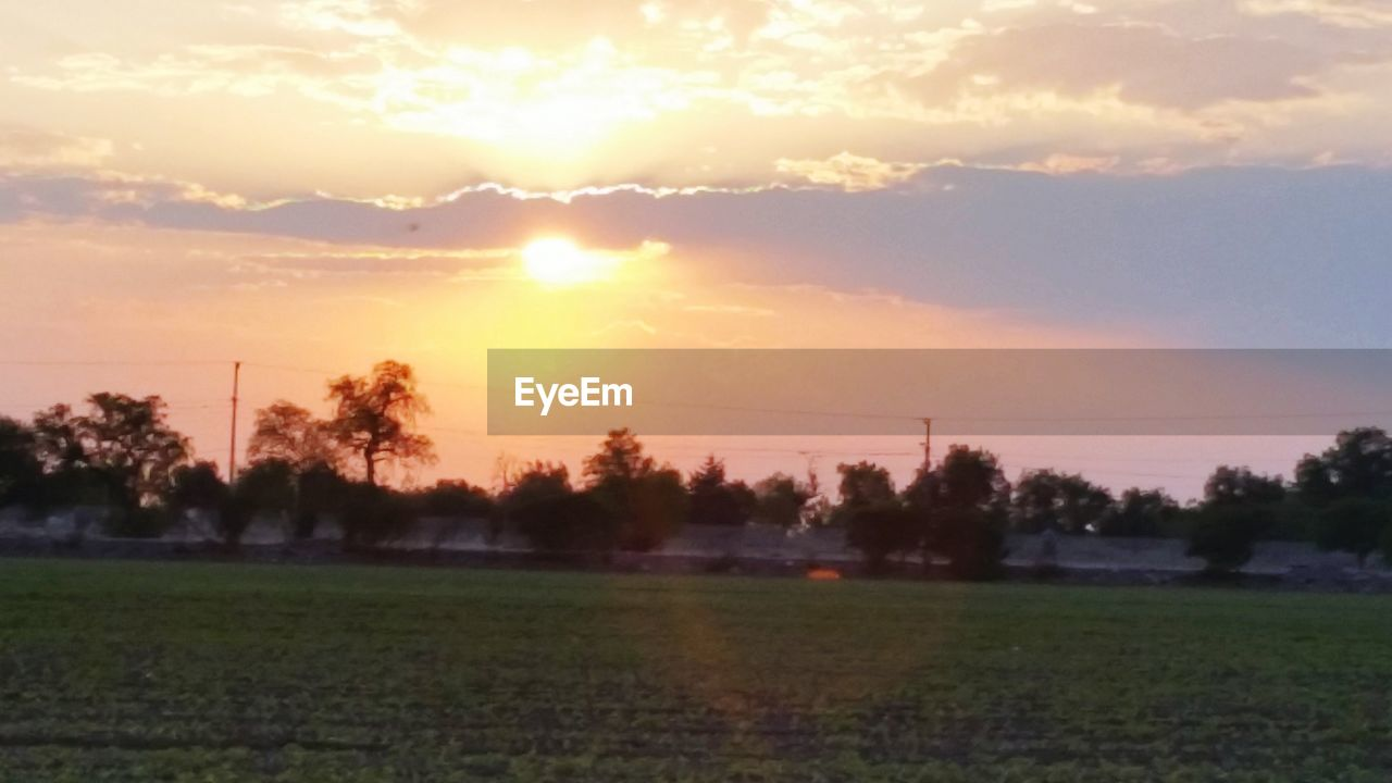 sunset, field, beauty in nature, tranquility, nature, sky, scenics, tree, tranquil scene, sun, landscape, orange color, no people, grass, agriculture, outdoors, growth, cloud - sky, sunlight, rural scene, day