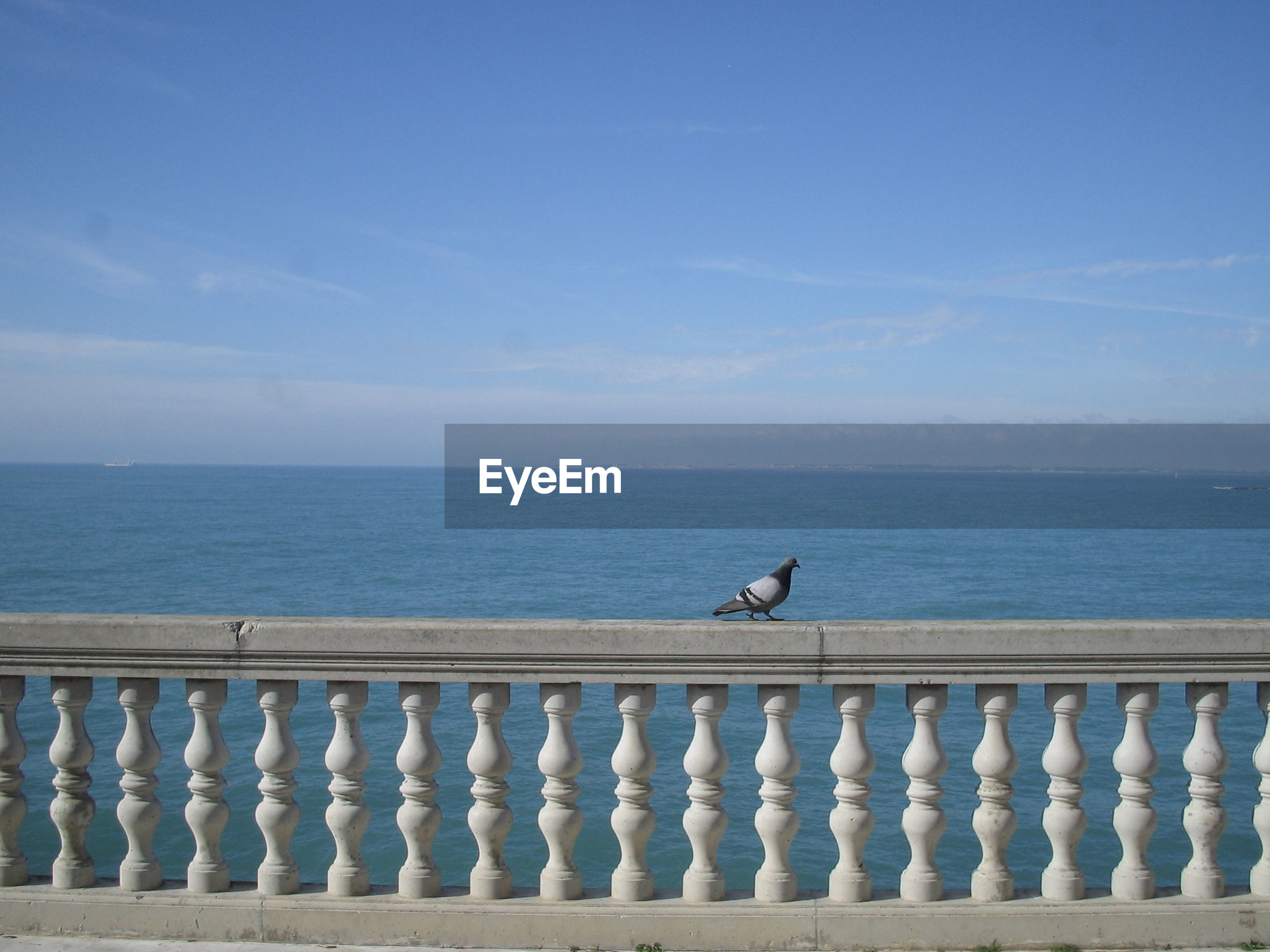 Pigeon perching on railing against sea during sunny day