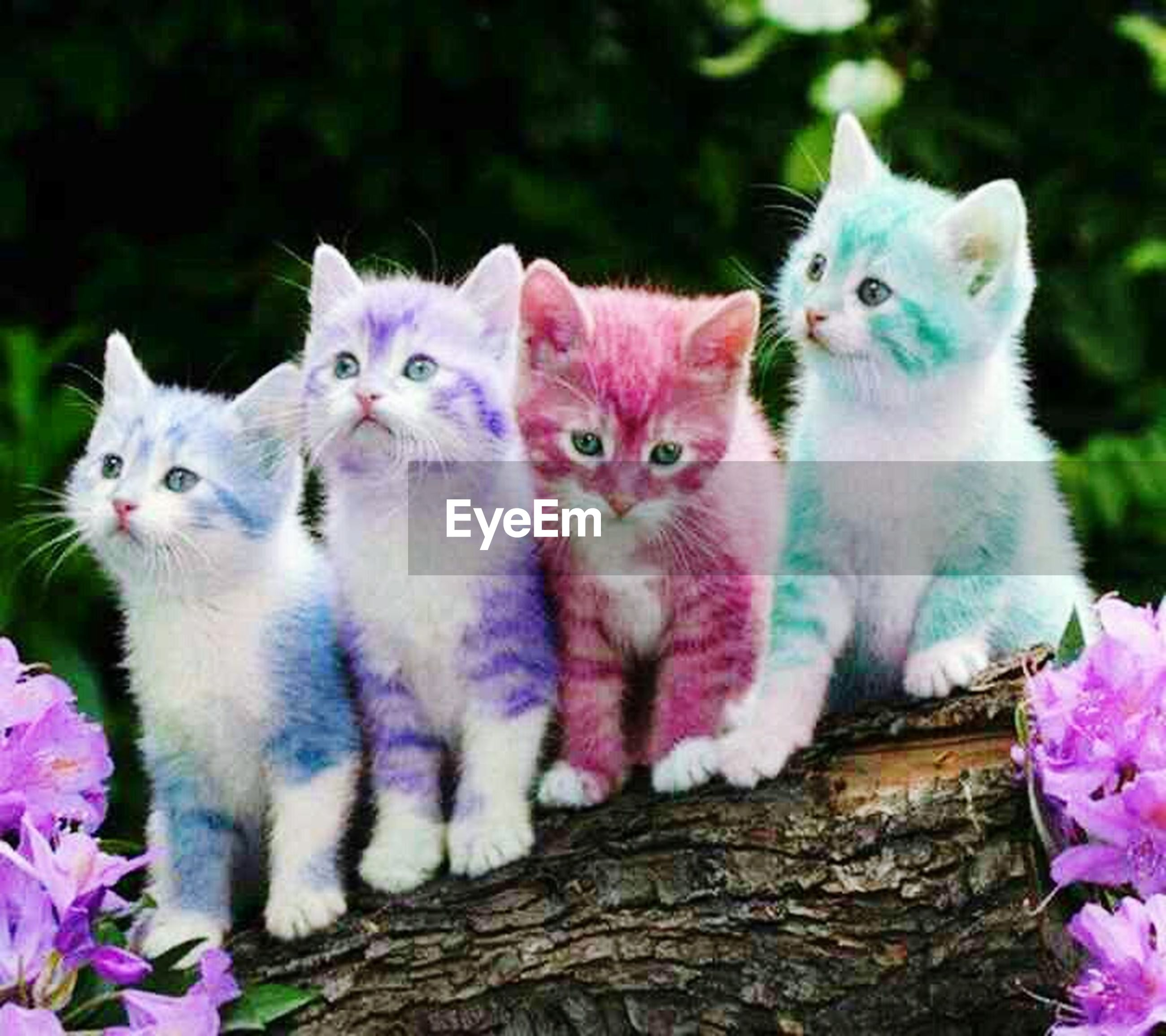 animal themes, domestic cat, domestic animals, cat, one animal, feline, mammal, pets, looking at camera, portrait, whisker, focus on foreground, two animals, sitting, close-up, young animal, alertness, front view, nature, kitten