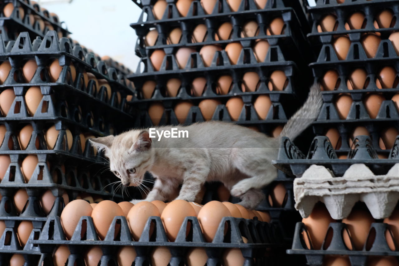 mammal, domestic animals, pets, domestic, cat, feline, domestic cat, one animal, vertebrate, no people, metal, architecture, roof, day, focus on foreground, full length, indoors, roof tile, whisker