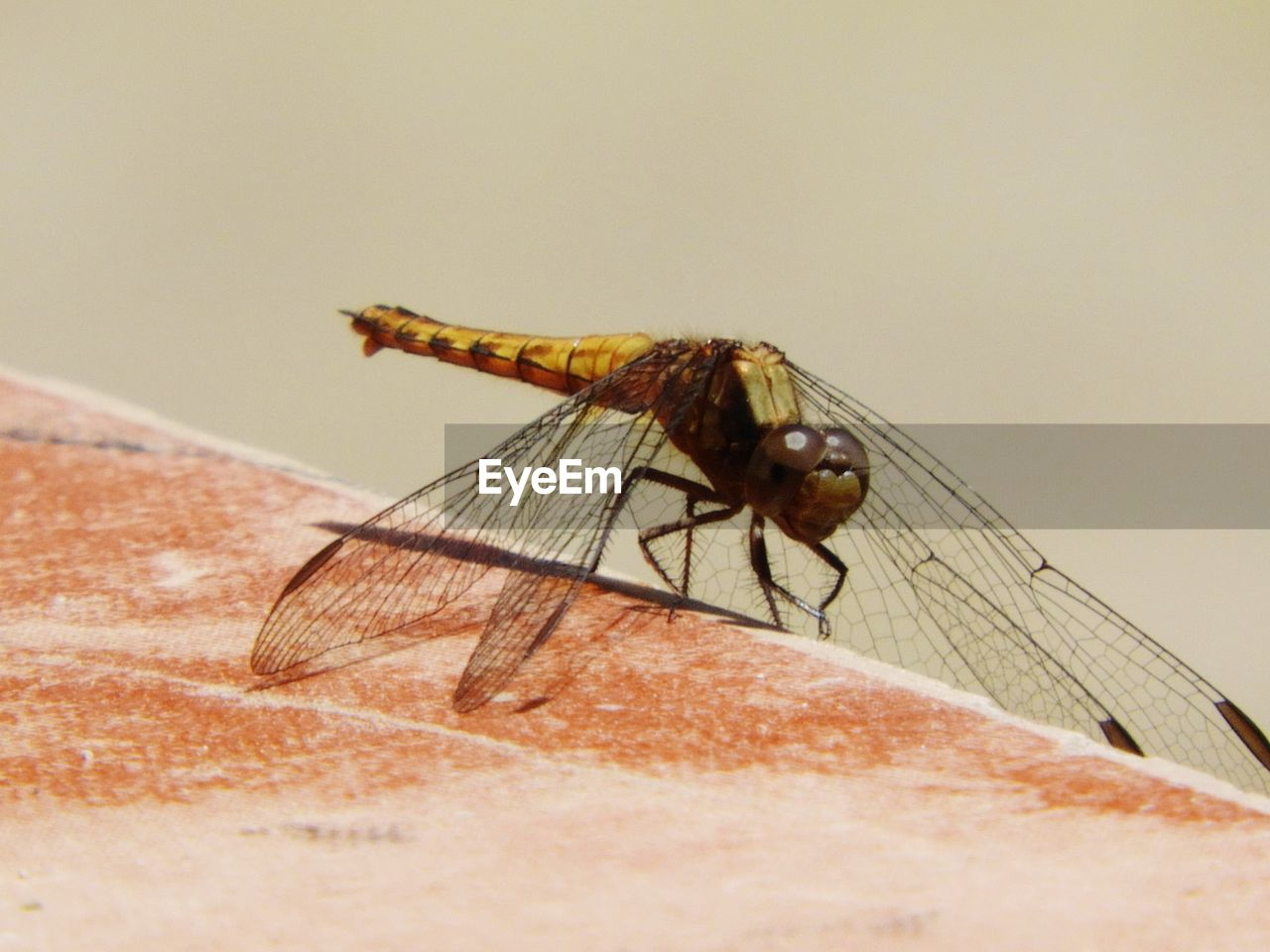 insect, animal themes, one animal, animals in the wild, close-up, day, no people, outdoors, nature