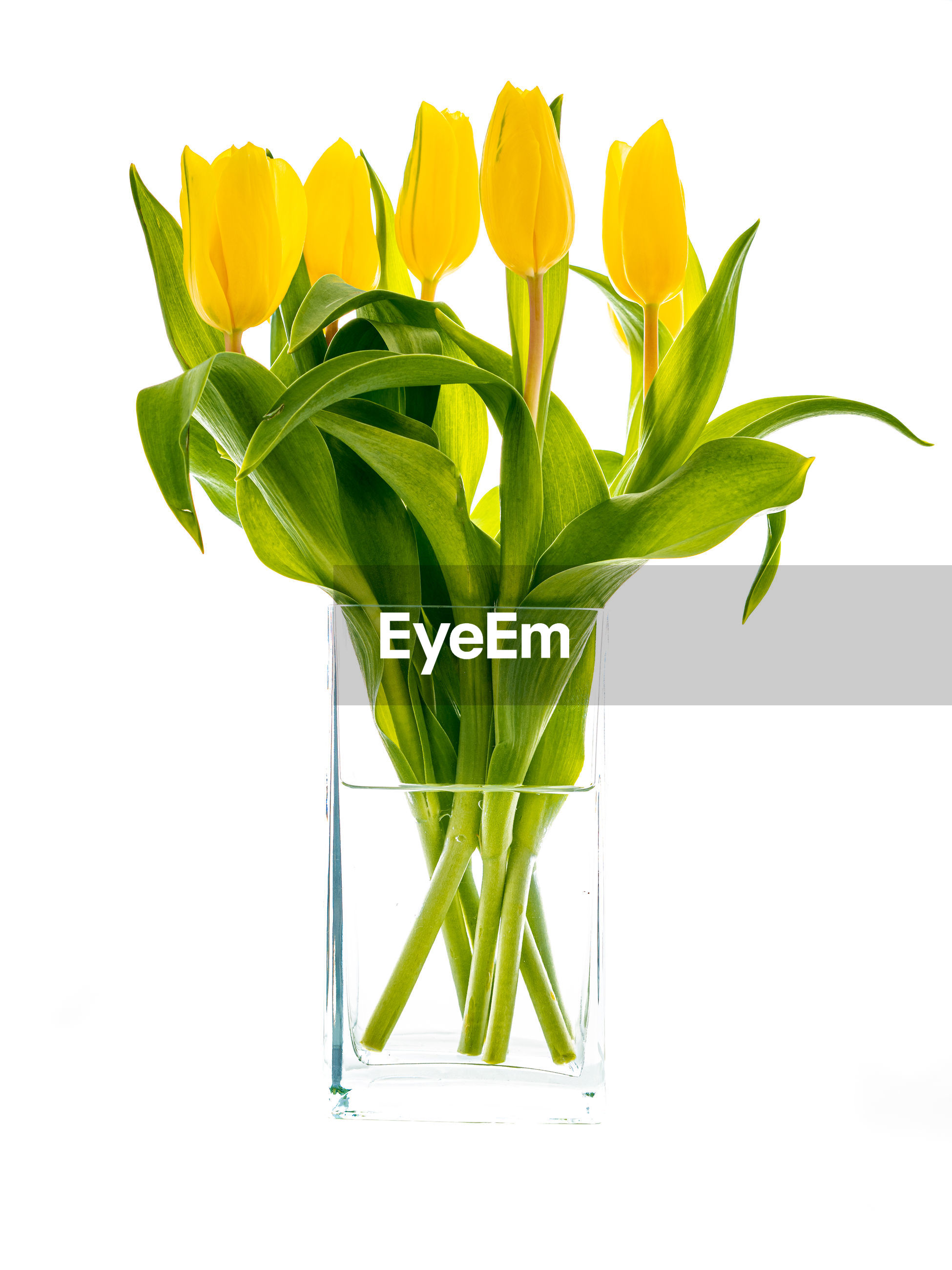 CLOSE-UP OF GREEN PLANT IN VASE