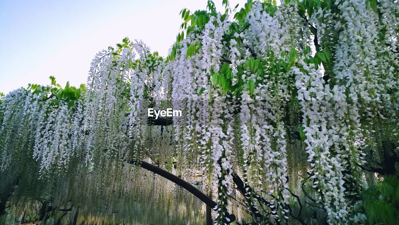 growth, nature, beauty in nature, plant, flower, no people, fragility, day, outdoors, freshness, green color, close-up, tree, sky