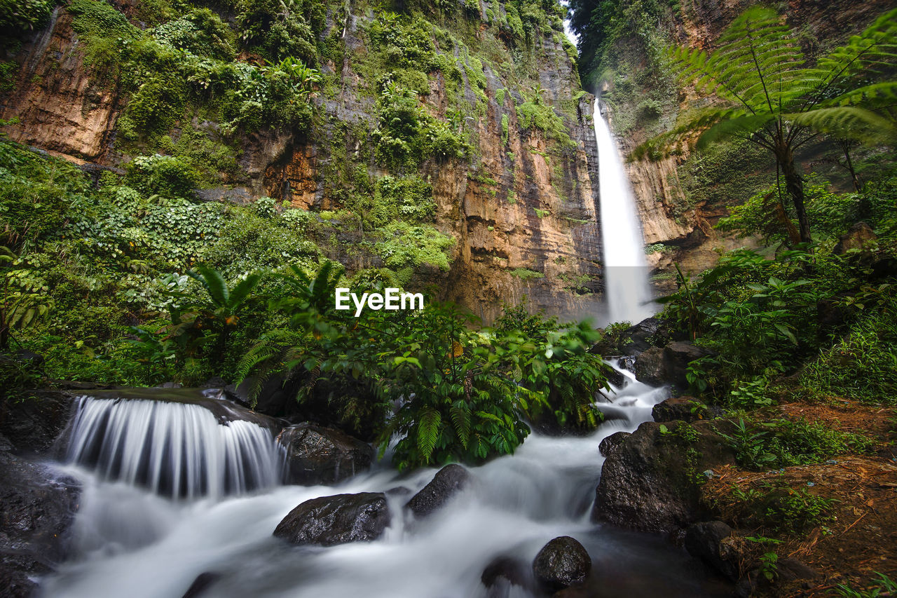 waterfall, scenics - nature, water, long exposure, forest, plant, tree, beauty in nature, flowing water, blurred motion, motion, solid, nature, rock, rock - object, land, no people, flowing, environment, rainforest, outdoors, power in nature, falling water, stream - flowing water