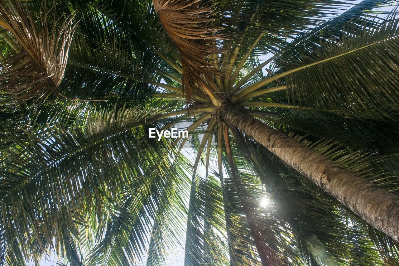palm tree, tree, tropical climate, plant, growth, beauty in nature, nature, no people, tranquility, palm leaf, day, low angle view, green color, water, outdoors, trunk, scenics - nature, tree trunk, leaf, coconut palm tree, tropical tree, directly below