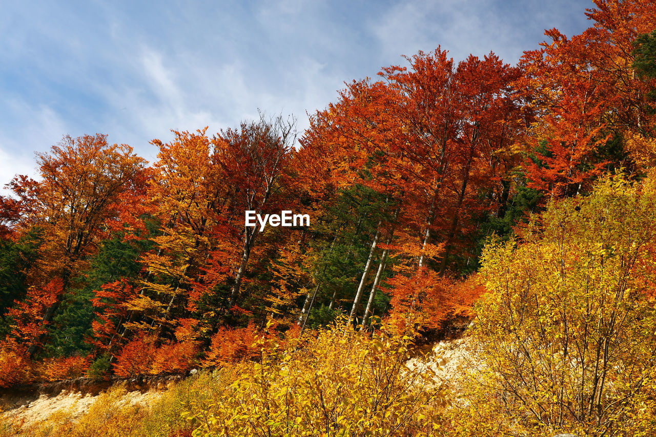 autumn, change, tree, nature, leaf, beauty in nature, orange color, tranquility, no people, tranquil scene, sky, maple tree, growth, day, scenics, outdoors, forest, water