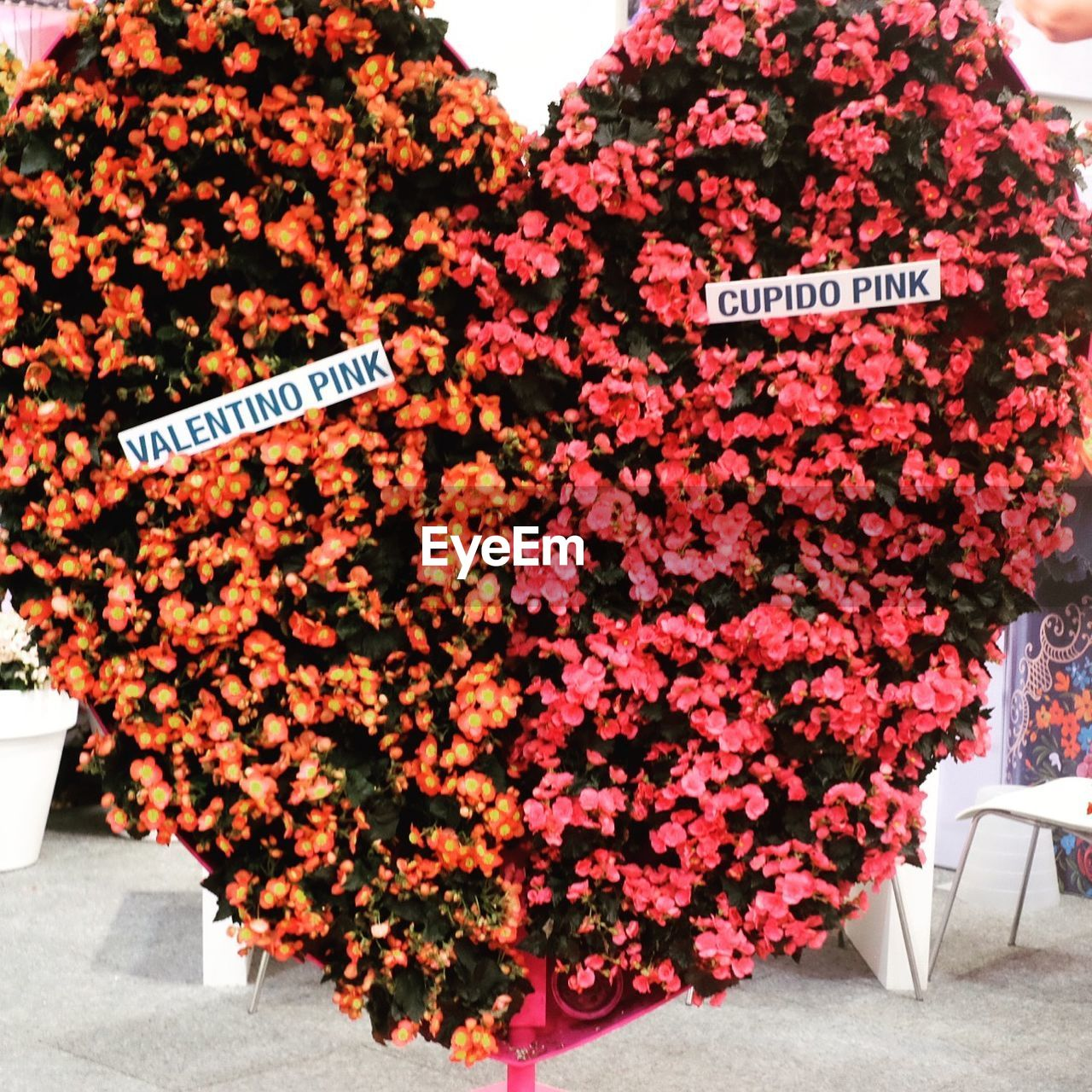 text, flower, communication, outdoors, flower market, no people, day, freshness, nature, close-up