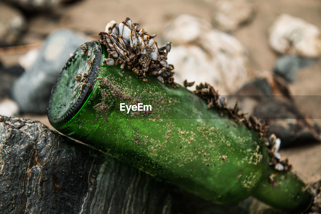 Close-Up Of Mussels On Abandoned Beer Bottle At Beach