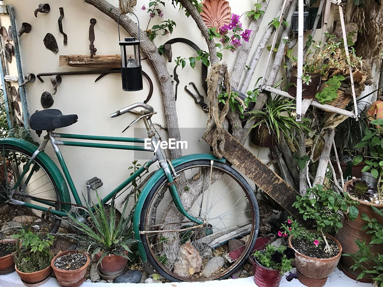 plant, bicycle, potted plant, mode of transportation, transportation, growth, no people, land vehicle, nature, stationary, day, green color, wall - building feature, plant part, outdoors, leaf, architecture, built structure, wheel, flowering plant, houseplant, flower pot