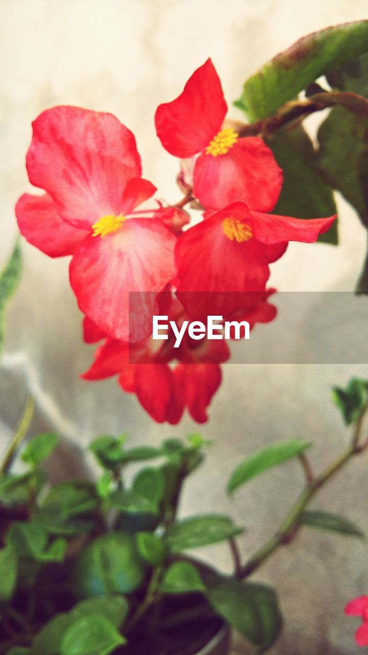 flower, petal, red, beauty in nature, fragility, nature, growth, plant, no people, freshness, flower head, blooming, outdoors, day, close-up, poppy, hibiscus
