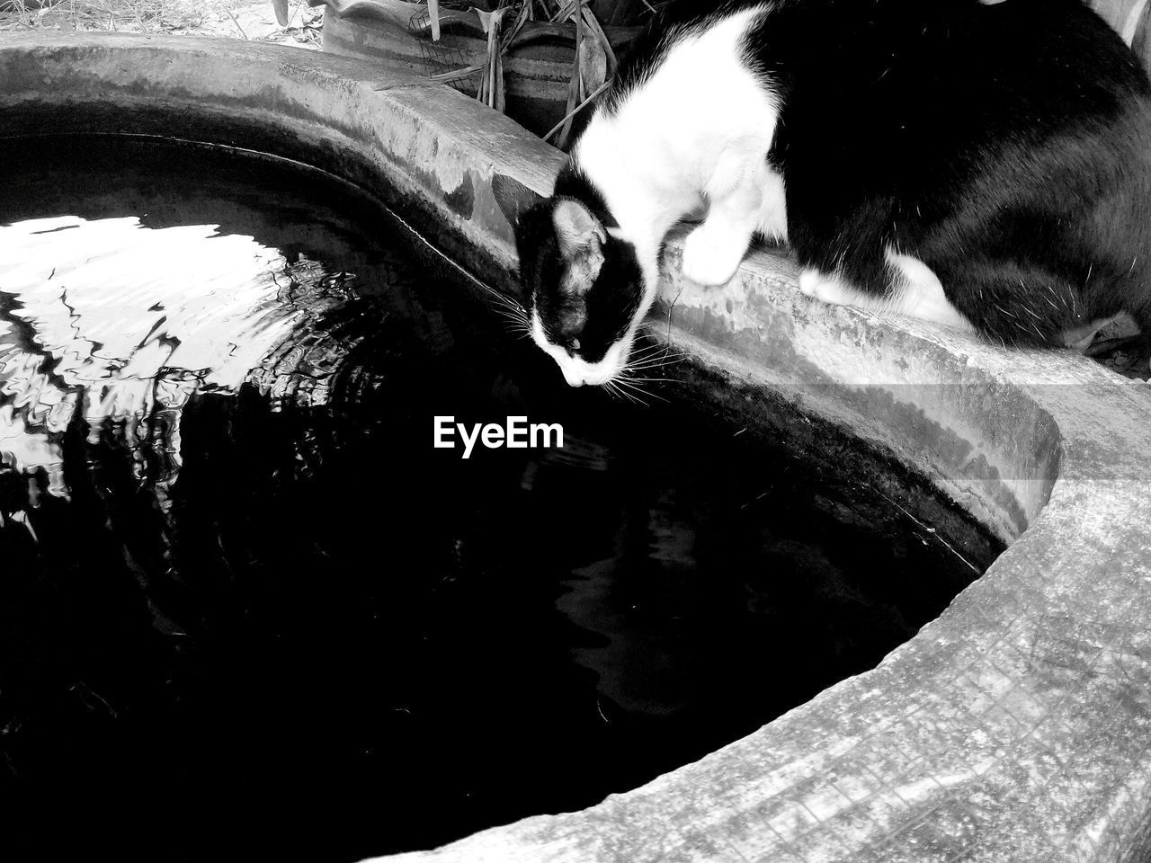 animal themes, mammal, one animal, water, domestic animals, pets, no people, dog, day, outdoors, close-up, nature