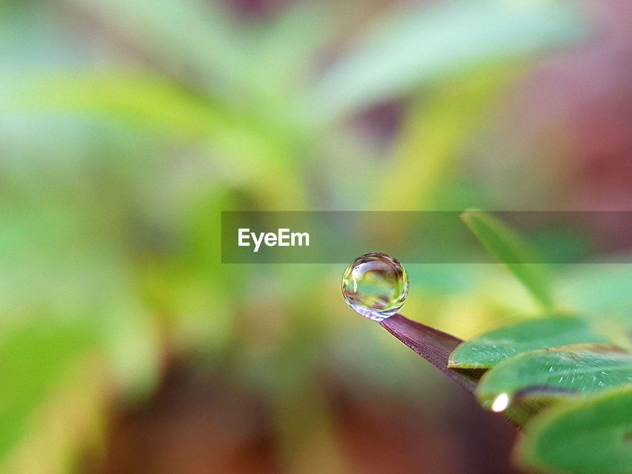 drop, nature, fragility, leaf, beauty in nature, plant, selective focus, focus on foreground, growth, close-up, day, no people, outdoors, water, freshness, animal themes