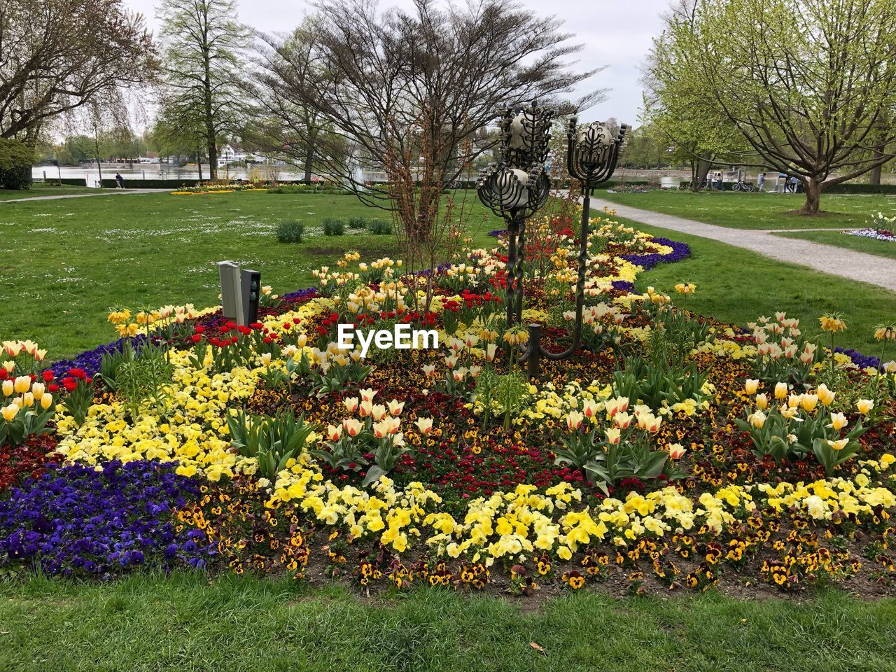 plant, flowering plant, flower, beauty in nature, growth, grass, nature, tree, park, freshness, tranquility, no people, park - man made space, day, yellow, tranquil scene, fragility, green color, vulnerability, field, outdoors, springtime, flowerbed, flower head