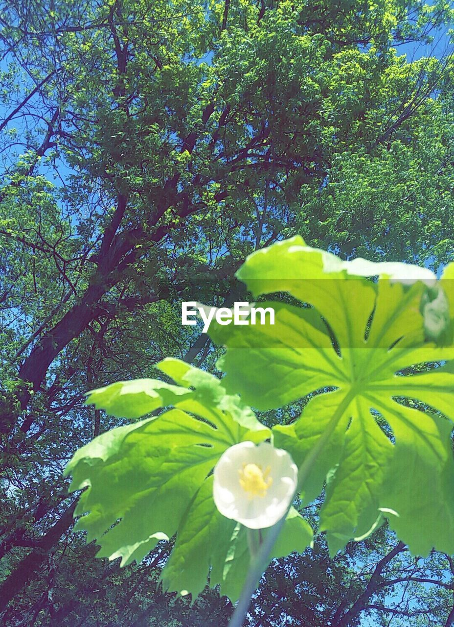 growth, nature, beauty in nature, flower, freshness, fragility, green color, leaf, plant, petal, blossom, no people, tree, springtime, day, blooming, outdoors, yellow, flower head, close-up, branch