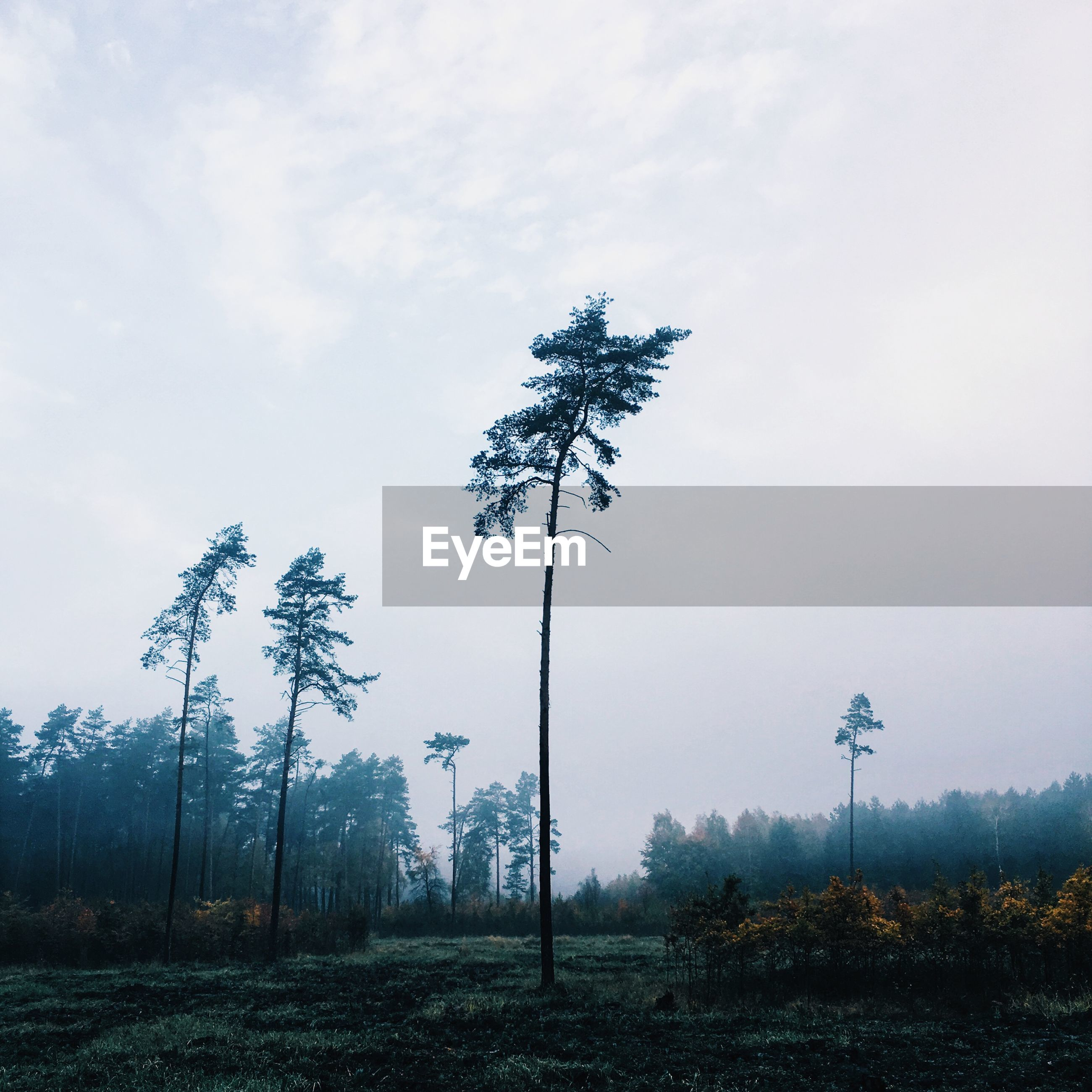TREE IN FOREST AGAINST SKY