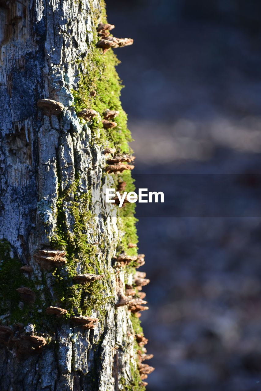 focus on foreground, nature, plant, day, no people, tree, close-up, outdoors, tree trunk, moss, textured, trunk, wood - material, rough, selective focus, beauty in nature, rusty, tranquility, growth, bark, lichen