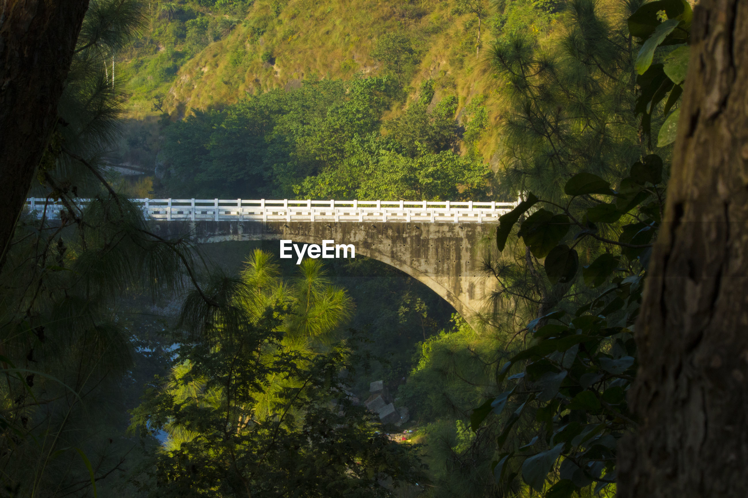 BRIDGE OVER RIVER BY TREES