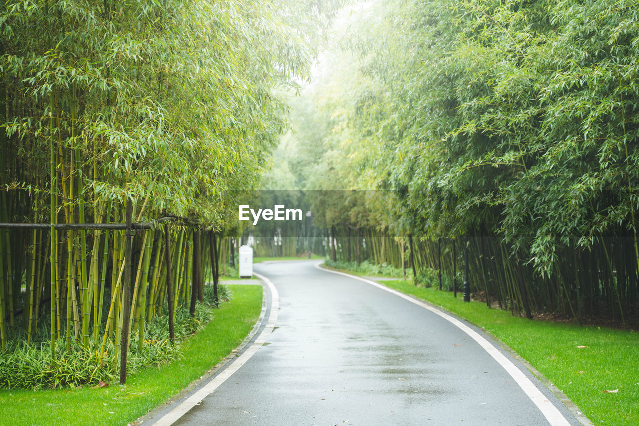 plant, tree, direction, the way forward, growth, green color, road, nature, beauty in nature, no people, day, forest, tranquility, transportation, diminishing perspective, outdoors, land, city, tranquil scene, foliage, treelined, bamboo - plant