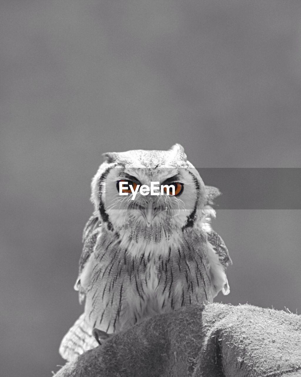 Close-Up Portrait Of Owl Against Sky