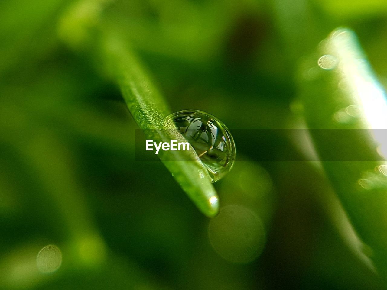 green color, plant, close-up, growth, leaf, selective focus, plant part, nature, animal wildlife, no people, one animal, beauty in nature, animals in the wild, drop, water, invertebrate, day, animal, animal themes, outdoors, dew, purity