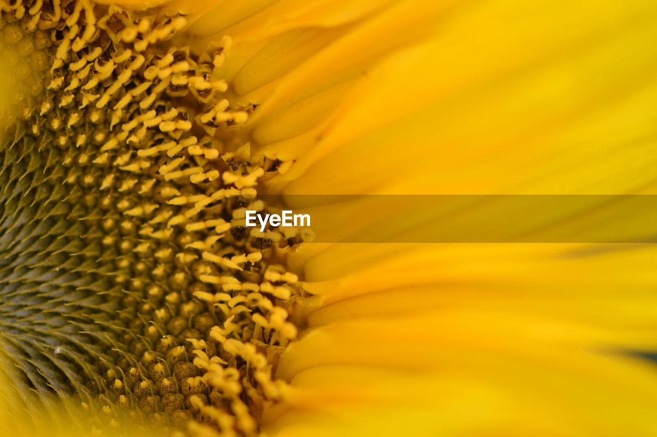 Detail Shot Of Yellow Flower