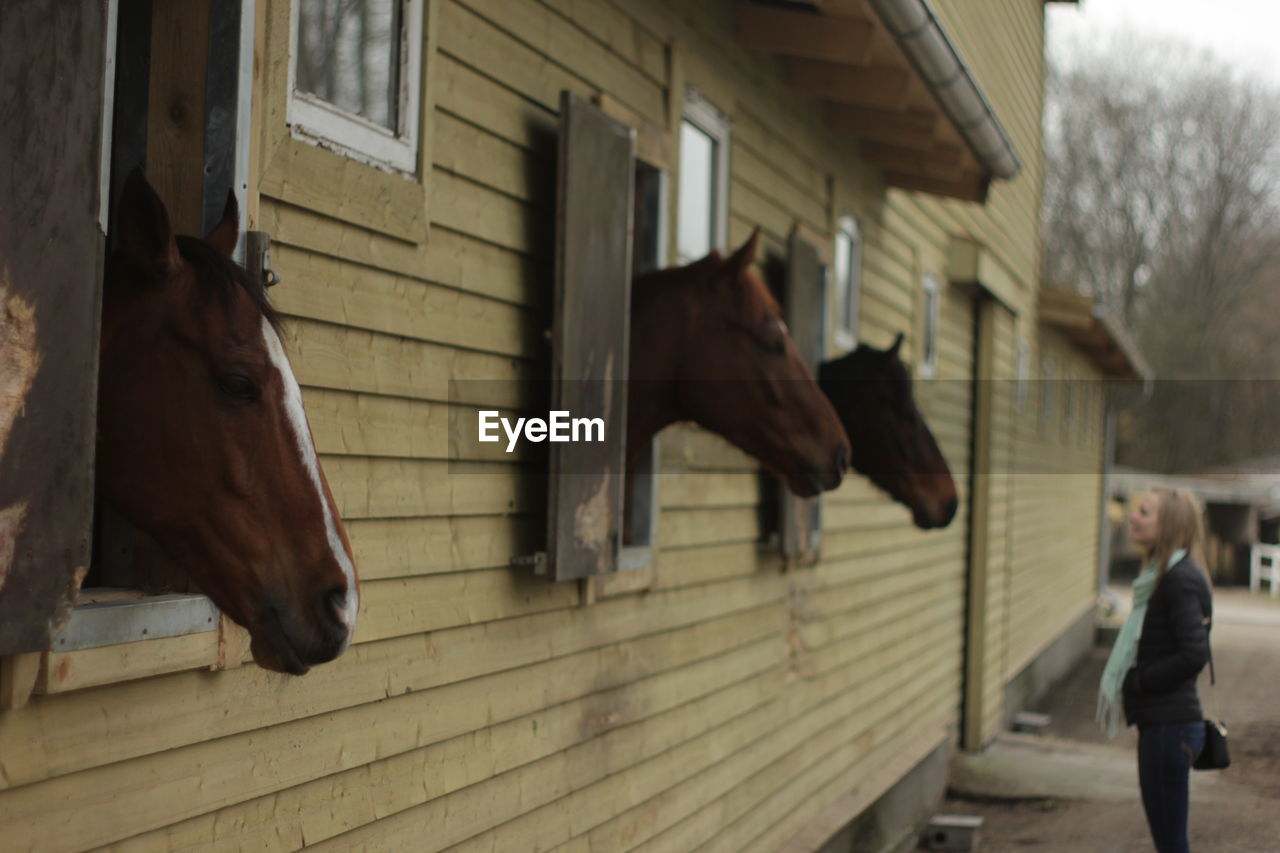 Side View Of Woman Looking At Horse In Stable