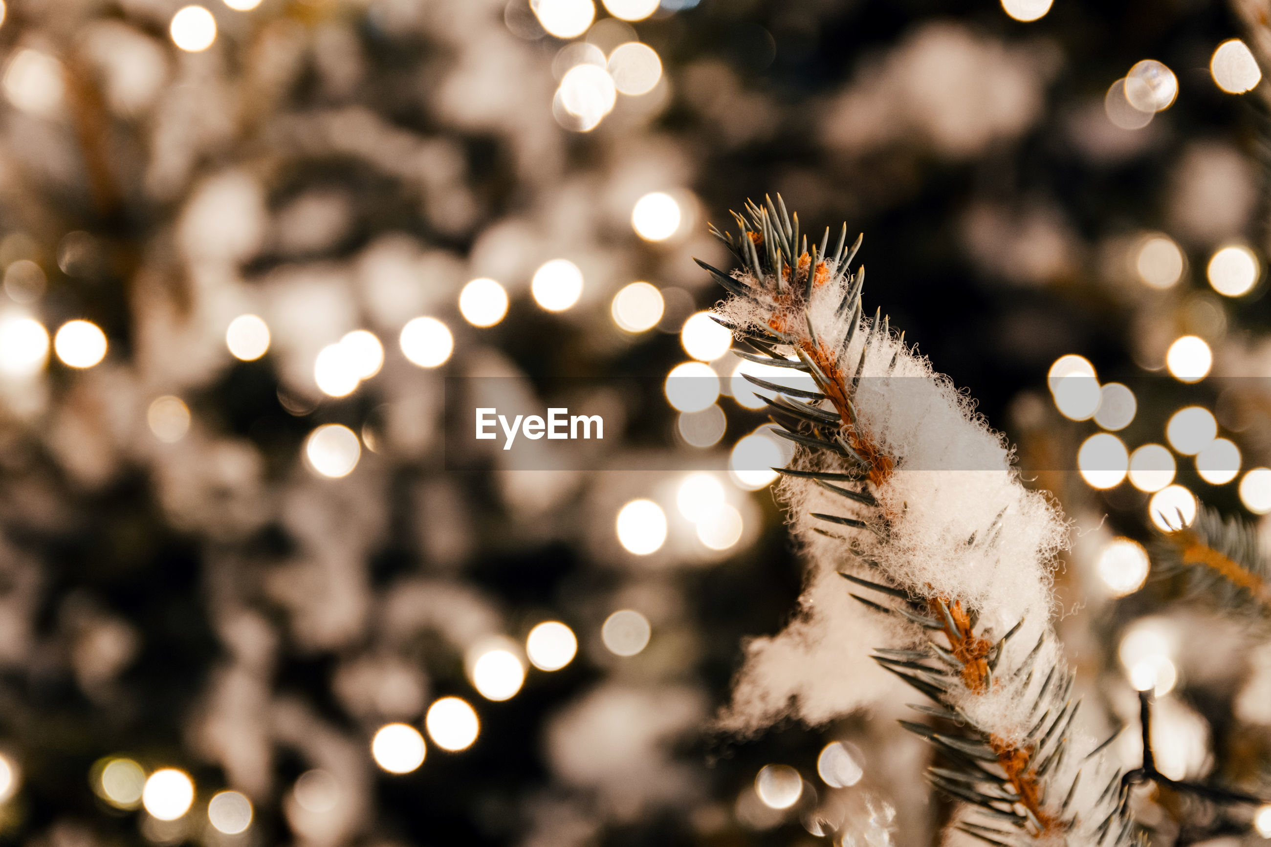 Christmas decorations. christmas tree branch closeup. bokeh lights, depth of field, selective focus.